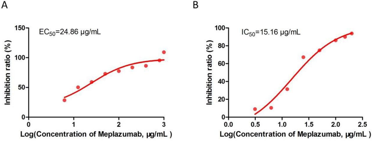 Meplazumab inhibits the SARS-CoV-2 replication. (A and B) 1×10 4 Vero E6 cells were cultured in a 96-well plate at 37°C overnight, the supernatant was discard and 100 μl of medium (containing different concentrations of Meplazumab) was added into the plates to incubate for 1 h. Then the cells were infected with SARS-CoV-2 (100TCID 50 ). After one-hour infection, the supernatants were removed and 200 μl of medium (containing different concentrations of Meplazumab) was added, the cells were cultured to observe the cytopathic changes for 2-3 days. The supernatants were harvested to detect the gene copy number of virus with quantitative PCR and the Vero E6 cells were stained by crystal violet staining. Finally, the value of optical density (OD) at 570 nm was measured with a microplate reader.