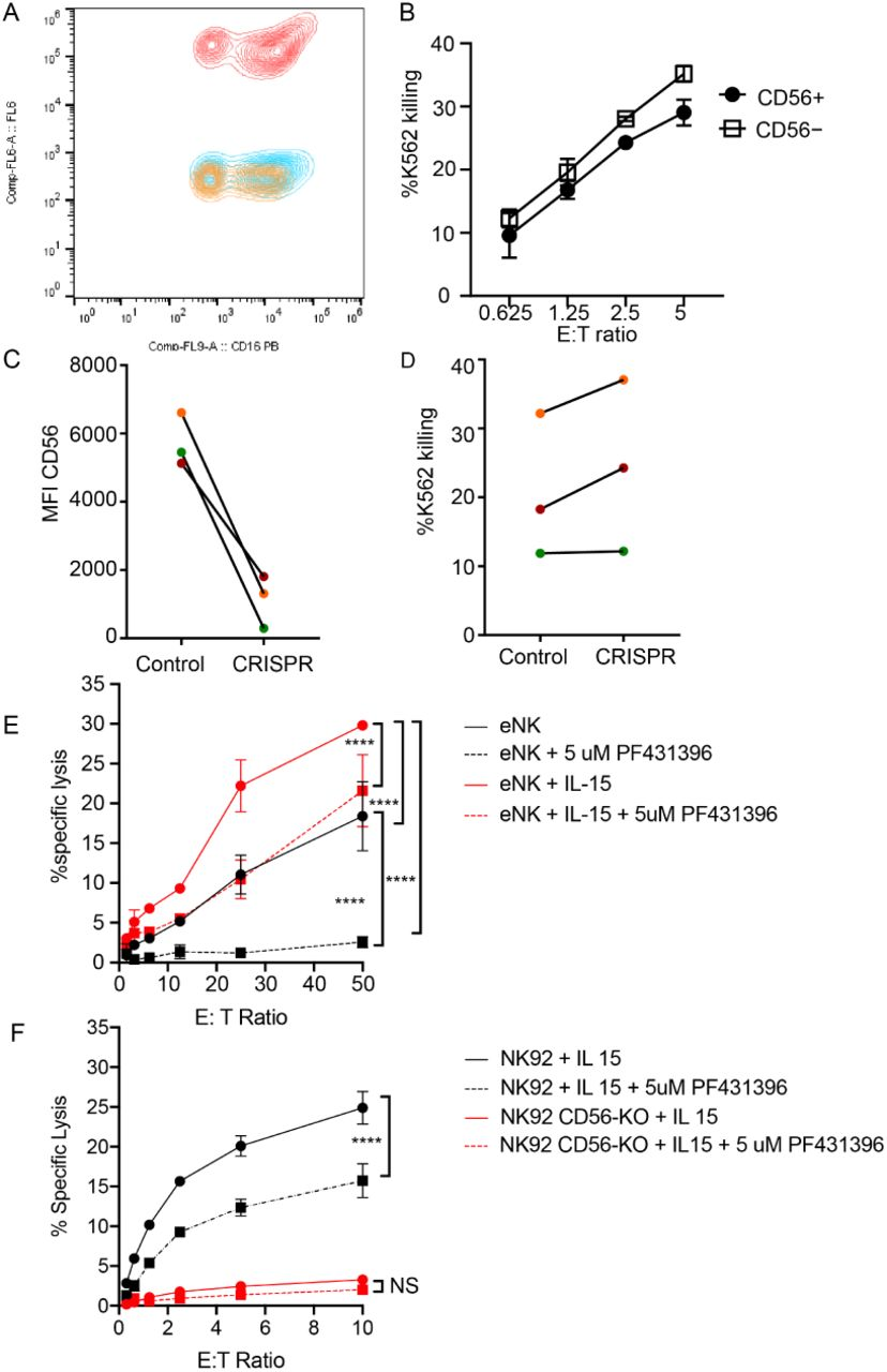 CD56-deficient primary NK cells retain lytic function. Primary NK cells were isolated and allowed to rest overnight in the presence of low-dose IL-15 prior to delivery of CD56 CRISPR-Cas9. Cells were further expanded in the presence of 25 ng/ml IL-15 for 15 days and cytotoxicity against K562 targets was measured. A) Representative FACS plot of CD56-deficient (blue) or control primary cells (red) after 15 days of Il-15 expansion. Shown also is the fluorescence minus one control (yellow). B) K562 target cell lysis by primary NK cells shown in (A). C) Control or CD56-deficient NK cells from 3 healthy donors were incubated for 1 week after CD56 CRISPR-Cas9 delivery in 25 ng/mL IL-15 then cells were isolated by FACS and cultured for an additional 8 days and the MFI of CD56 was measured by flow cytometry. D) Specific lysis of K562 target cells by isolated and expanded CD56 bright NK cells from the 3 healthy donors shown in (C). E) Primary NK cells were incubated and expanded for 14 days in the presence of 50 ng/ml IL-15 then cytotoxicity against K562 target cells was tested in the presence or absence of Pyk2 inhibitor PF431396. Freshly isolated, non-expanded NK cells were used as a control and similarly treated with PF431396. F) WT or CD56-KO NK92 cells were incubated for 7 days in the presence of 50 ng/ml IL-15 then cytotoxicity was tested in the presence or absence of PF431396. Shown is one representative experiment from 3 independent biological repeats. Error bars indicate technical repeats ( 3 ), SEM.