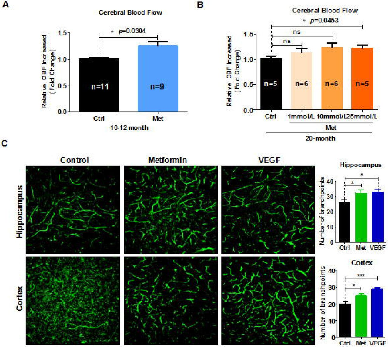 Metformin rejuvenation of neurogenic potential in aged mice. (A) The subventricular zone (SVZ) of old mice treated with metformin ( n ≥ 3) immunostained with the neural stem cell marker, Sox2, and newborn neuronal marker, GFAP. Right: Quantification of (B) Sox2 + cells and (C) DCX + cells. (D) SVZ of old mice immunostained with the neuronal cell marker, NeuN, and cell proliferation marker, BrdU. Right: Quantification of (E) BrdU + /NeuN + cells to quantify newborn neurons. (F) Representative fields of GFAP and Tuj1 immunofluorescence staining of cultured neural stem cells treated with metformin after 7 days of spontaneous differentiation. Right: Statistical analysis of percentages of (G) GFAP + cells and (H) Tuj1 + cells. Scale bar = 100 μm. Ctrl: Control; Met: Metformin. The overall significance between two groups was determined by Student's t -test. * p