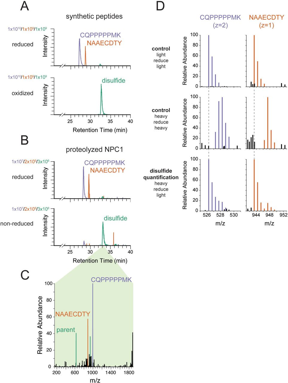 """Engineered cysteines C251 and C929 form a disulfide bond in NPC1. (A) Extracted ion chromatograms from LC-MS analysis of synthetic peptides corresponding to engineered cysteines in NPC1. In both samples, blue traces represent m/z = 526.2569 (corresponding to carbamidomethylated CQPPPPPMK from NPC1 P251C), red traces represent m/z = 943.3462 (corresponding to carbamidomethylated NAAECDTY from NPC1 L929C), and green traces represent m/z = 626.6005 (corresponding to the disulfide formed between CQPPPPPMK and NAAECDTY). The peptide standards CQPPPPPMK and NAAECDTY were produced by solid phase synthesis and either reduced and carbamidomethylated or oxidized to the disulfide using Ellman's reagent. (B) Extracted ion chromatograms from LC-MS analysis of proteolyzed NPC1. Colors as in A. NPC1 protein was carbamidomethylated in the presence or absence of reducing agent prior to proteolysis. (C) EThcD mass spectrum from NPC1 sample in part B, demonstrating the reductive fragmentation of the putative disulfide precursor into ions with masses corresponding to the two constituent peptides. Peaks matching the mass of the peptide CQPPPPPMK (monoisotopic mass of thiol = 994.49 Da) are colored in blue; peaks matching the masses of the peptides NAAECDTY (monoisotopic mass of thiol radical = 885.32 Da) are colored in red; peaks matching multiple charge states of the spectrum's parent ions (m/z = 626.60, z = 3, corresponding to the disulfide) are colored in green. (D) MS1 mass spectra of NPC1 peptides whose disulfide content has been quantified using isotope-labeled iodoacetamide. Free thiols in purified NPC1 were labeled with 13 C 2 D 2 -iodoacetamide (""""heavy""""). Then the disulfides were reduced and the resulting reactive cysteines were labeled with iodoacetamide lacking isotope labels (""""light"""") followed by proteolysis and LC-MS analysis. Control samples were labeled with the same reagent before and after reduction (""""light/reduce/light"""" and """"heavy/reduce/heavy"""") to identify isotope dis"""