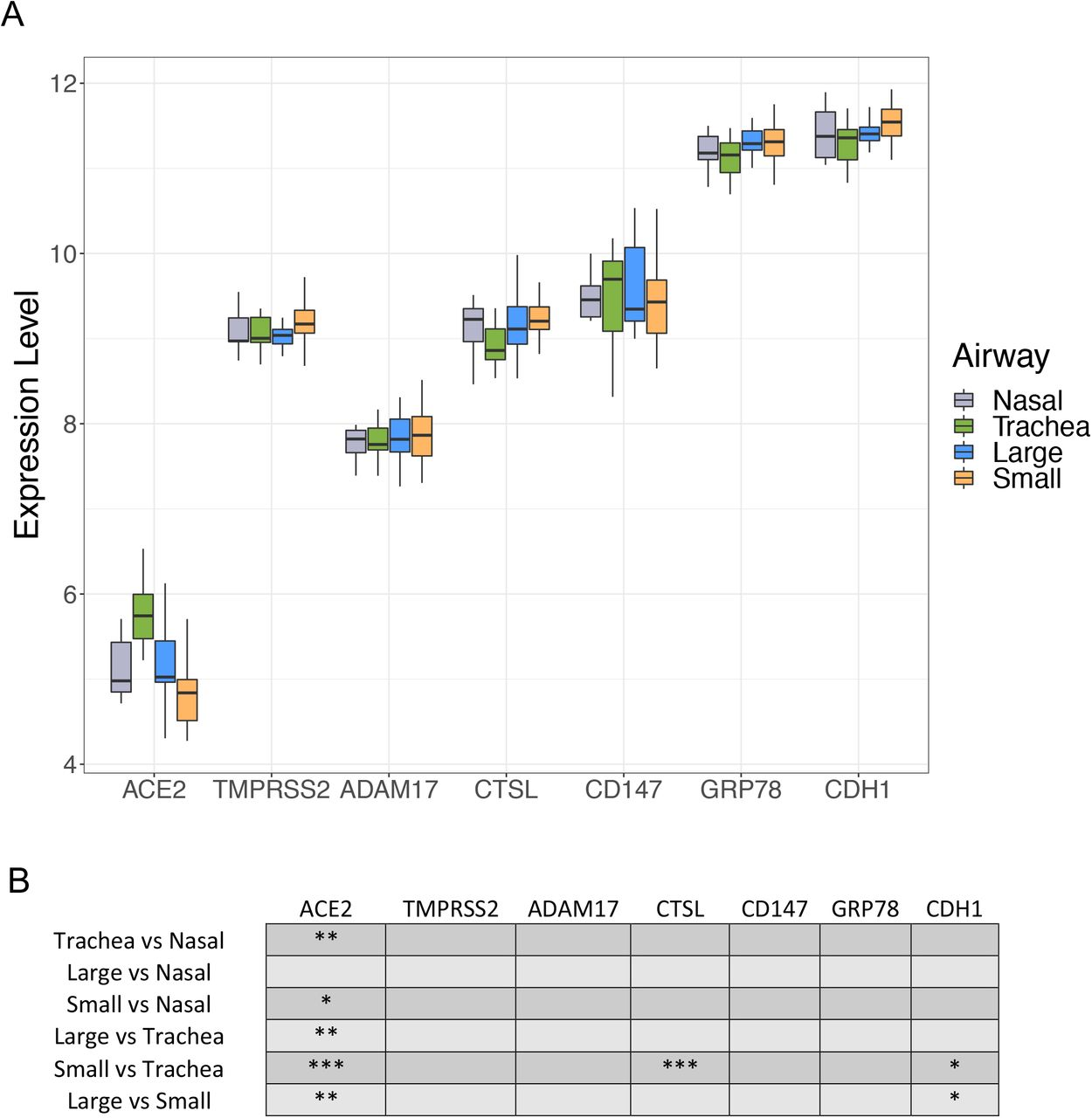 Microarray expression profiles of candidate SARS-CoV-2 receptor genes in upper and lower airways. A: Normalized log 2 expression levels for ACE2, TMPRSS2, ADAM17, CTSL, CD147 , and GRP78 genes compared across the upper airway (nasal, grey) and lower airways (trachea, green; large airway, blue; small airway, orange). CDH1 gene expression level is included as a positive control. B: Statistical values for comparisons for each gene at each airway generation. *= p