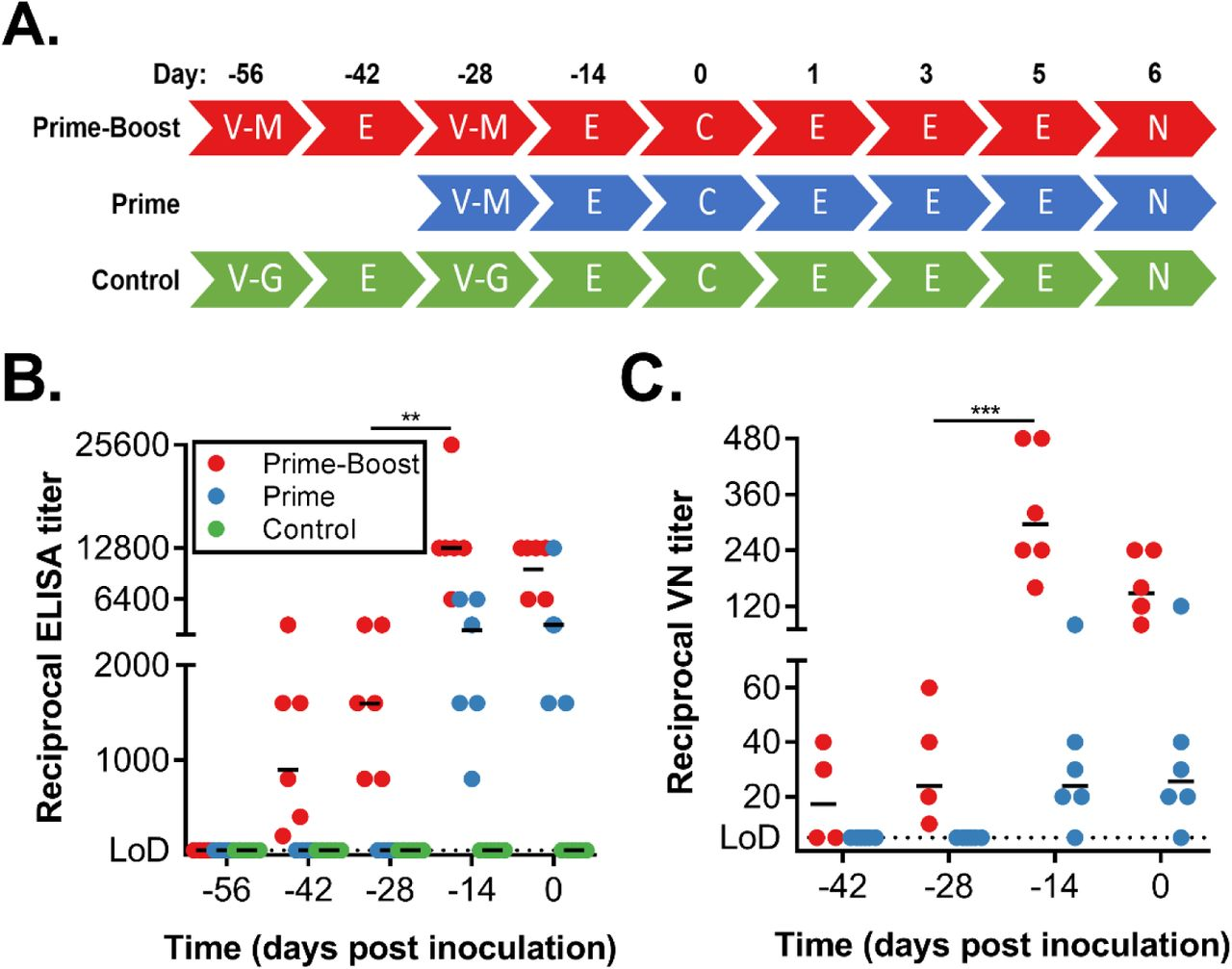 Vaccination of rhesus macaques with ChAdOx1 MERS elicits a humoral immune response. Serum samples were collected from non-human primates at times of vaccination (−56 DPI and -28 DPI), 14 days later and at challenge. (A) Overview of experimental timeline. V-M = vaccination with ChAdOx1 MERS; V-G = vaccination with ChAdOx1 GFP; E = exam; C = challenge and exam; N = exam and necropsy (B) Two-fold serial-diluted serum samples were tested for MERS-CoV S-specific antibodies using ELISA. (C) ELISA-positive two-fold serial-diluted serum samples were tested for neutralizing antibodies against MERS-CoV in VeroE6 cells. Line = geometric mean, dotted line = limit of detection. Statistical significance between -28 DPI and -14 DPI in the prime-boost group was determined via one-tailed paired Student's t-test. ** = p-value
