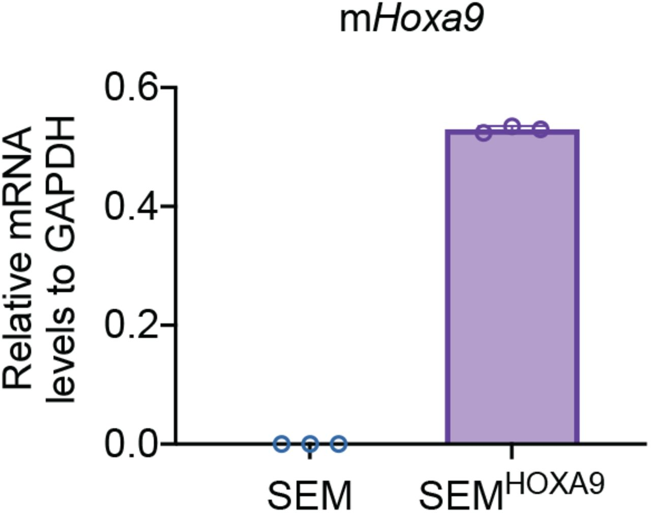 Validation of ectopic overexpression of HOXA9. A retroviral mouse Hoxa9 expression cassette was infected into SEM cells followed by quantification of Q-PCR using specific primers against mouse Hoxa9 coding sequence. Data are means ± SEM from two independent experiments.