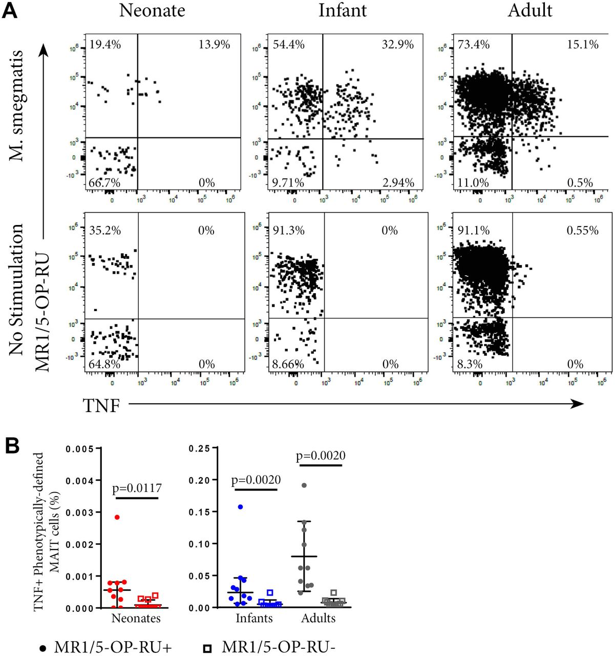 Functional analysis of MAIT cells in individuals of different ages. <t>PBMC</t> or CBMC from the US cohort were incubated overnight with M. smegmatis -infected A549 cells or uninfected A549 cells and then stained with the MR1-5-OP-RU or MR1/6FP tetramers, followed by staining with a live/dead discriminator and antibodies to TCRγδ, CD3, CD4, CD8, TRAV1-2, CD26 and CD161. <t>ICS</t> was then performed and the cells stained for TNF. A . Dot plots showing representative co-staining of live, TCRγδ - CD3 + TRAV1-2 + CD26 + CD161 + cells with MR1-5-OP-RU and TNF in M. smegmatis stimulated or unstimulated samples. The gating strategy is shown in Figure S3. Examples of the TNF response in a neonate, infant and adult are shown. B . Frequencies of functional, phenotypically-defined (CD3 + TRAV1-2 + CD26 + CD161 + ) MAIT cells that are MR1-5-OP-RU + or MR1-5-OP-RU - as a proportion of CD3 + TCRγδ - T cells. Horizontal lines depict the median and the error bars the 95% confidence interval. Wilcoxon-rank sum was used to test differences within the same cohort.