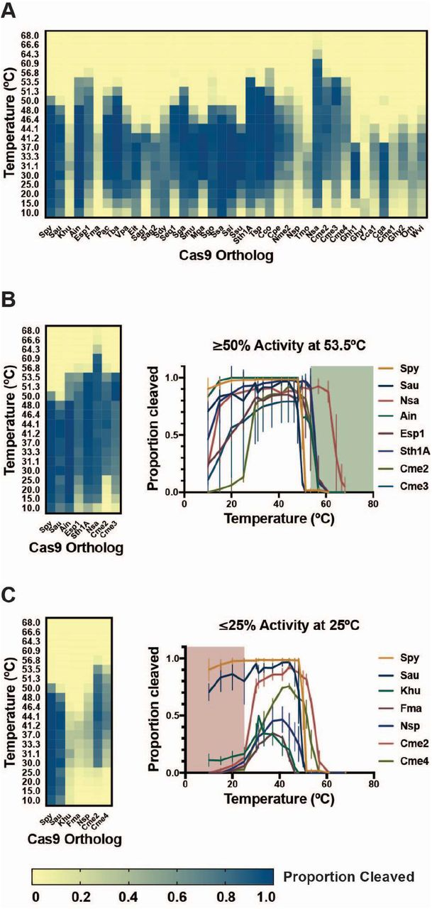 Activity of Cas9 orthologs at varying temperatures. The cleavage activity of Cas9 orthologs was measured using in vitro DNA cleavage assays using fluorophore-labeled dsDNA substrates. Cleaved fragments were quantitated and are represented in a heat map (A) showing overall activity at temperatures ranging from 10°C to 68°C. (B) Cas9 orthologs with activity at elevated temperatures. In vitro DNA cleavage activity for a subset of Cas9 orthologs with > 50% activity at 53°C is summarized in a heat map and plotted as proportion of DNA substrate cleaved at varied temperature. Points represent the mean +/- SEM of at least 3 independent experiments. (C) Cas9 orthologs with reduced activity at room temperature. In vitro DNA cleavage activity for a subset of Cas9 orthologs with