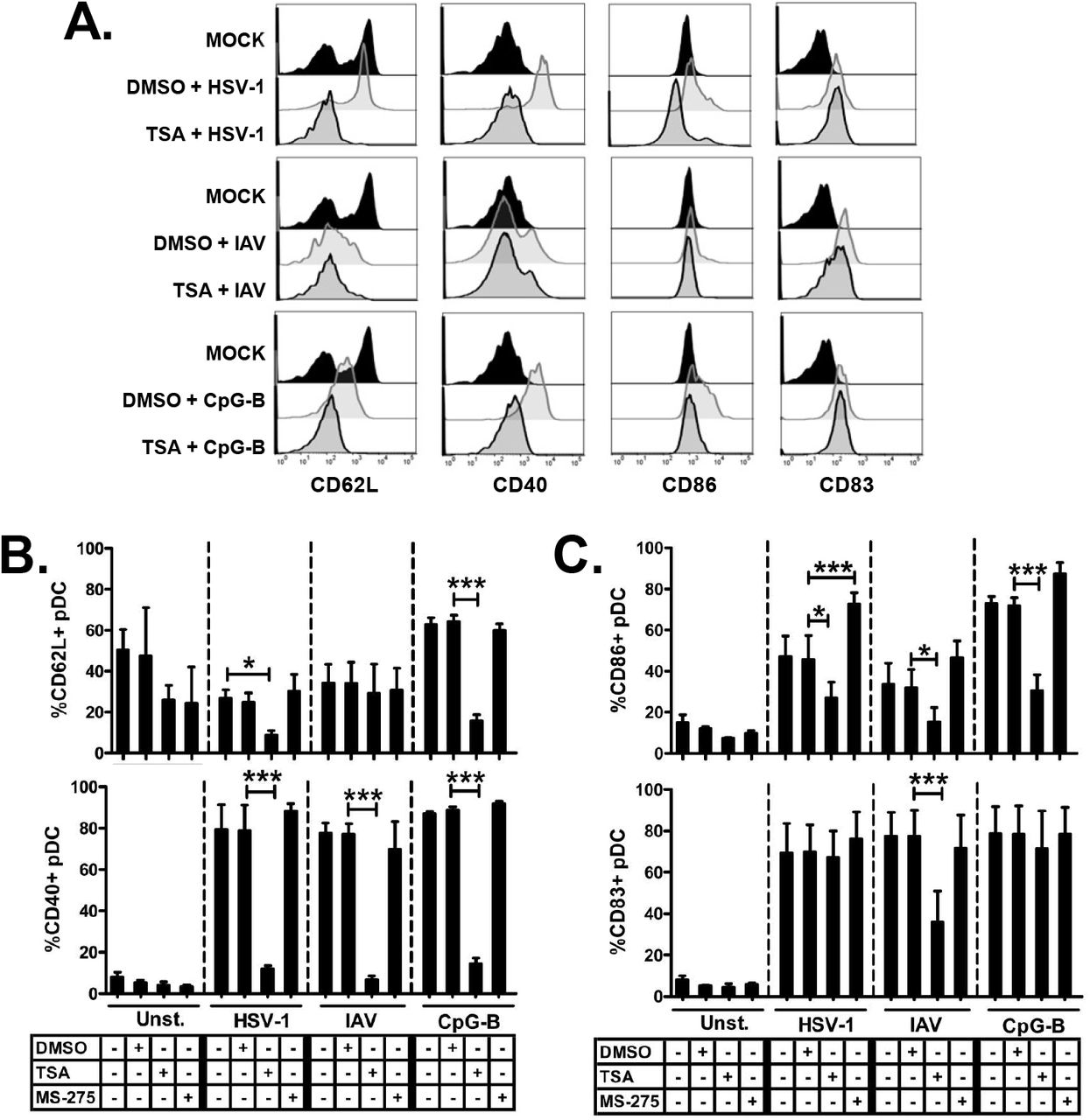 TSA and MS-275 inhibit the upregulation of pDC maturation markers upon TLR7/9 stimulation, and increase the shedding of the activation marker CD62L. PBMC were incubated with TSA (100 ng/ml), MS-275 (5 μM), or DMSO (1:530) for 1 hour and then stimulated with HSV-1 (MOI of 1), IAV (MOI of 2), or CpG-B (5 μg/ml) for 8 hours. Representative data derived from events first gated on PBMC, then pDC were identified by a BDCA-2 + /CD123 high gate. From this gate, histograms were derived and gates applied based on the unstimulated control in DMSO (Mock) (A) . Surface expression of CD62L (B, top) , CD40 (B, bottom) , CD86 (C, top), CD82 (C, bottom) were measured by flow cytometry and reported as percentage. (N = 4, 4 independent experiments with different donors; Data are expressed as mean ± SEM; Data were analyzed with 1-way ANOVA and Bonferroni's post test; *p