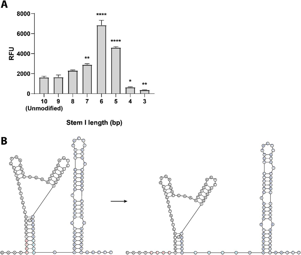 Shortening the ribozyme stem increases minigenome activity. (A) Transfection of HEK293T cells with different mutants of the pCAGGS-HHRz-3M-eGFP-5M minigenome shows that minigenome activity can be increased by reducing complementarity between the ribozyme and the MARV trailer. Shortening by 3-5 nucleotides significantly increases activity, with an optimum at a residual stem length of six base pairs. Data from three independent experiments, done in triplicate. Error bars indicate the standard error of mean. Significance testing was done using one-way ANOVA with Dunnett's test for multiple comparisons: * p