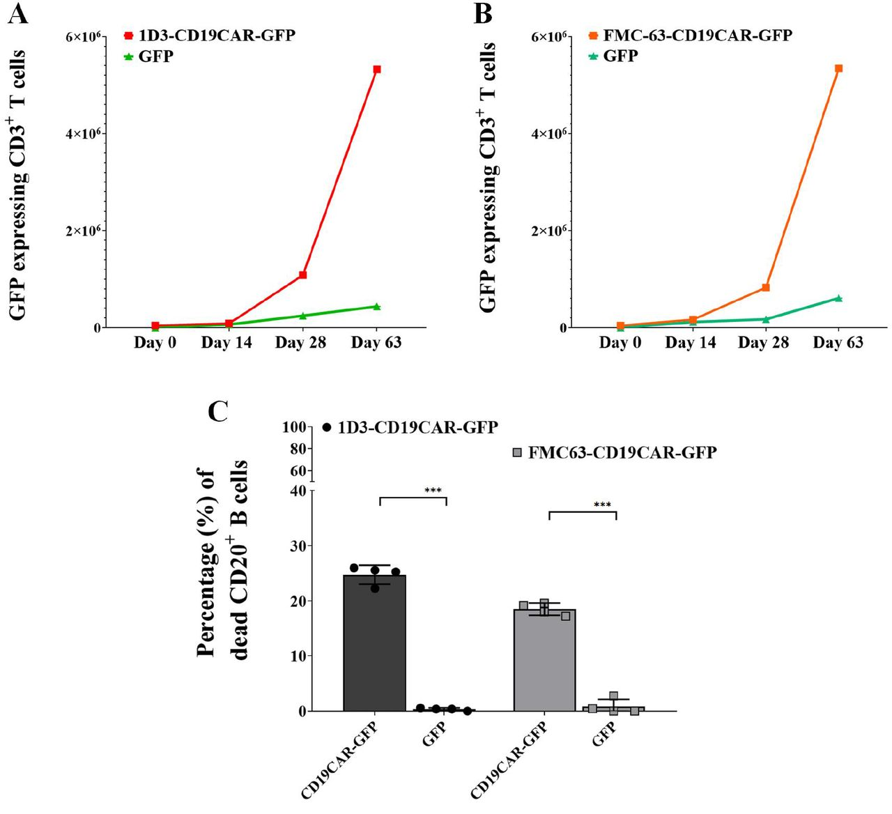 Proliferation and cytolytic properties of CD3+ T cells from C57BL/6 splenocytestransduced with 1D3-CD19CAR-GFP, FMC63-CD19CAR-GFP, or GFP only transgenes. Figure 2A : 2.5×10 5 C57BL/6 splenocytes were transduced with 1D3-CD19CAR-GFP or GFP-only lentivirus at an MOI of 5. The transduced splenocytes were then co-cultured with an excess of irradiated C57BL/6 splenocytes which provided a source of B cells expressing the CD19 antigen. The 1D3-CD19CAR transduced splenocytes showed a 12.2+/− 0.09 (mean +/− SD) fold greater expansion (red, square), compared to GFP transduced (green, triangle) (p