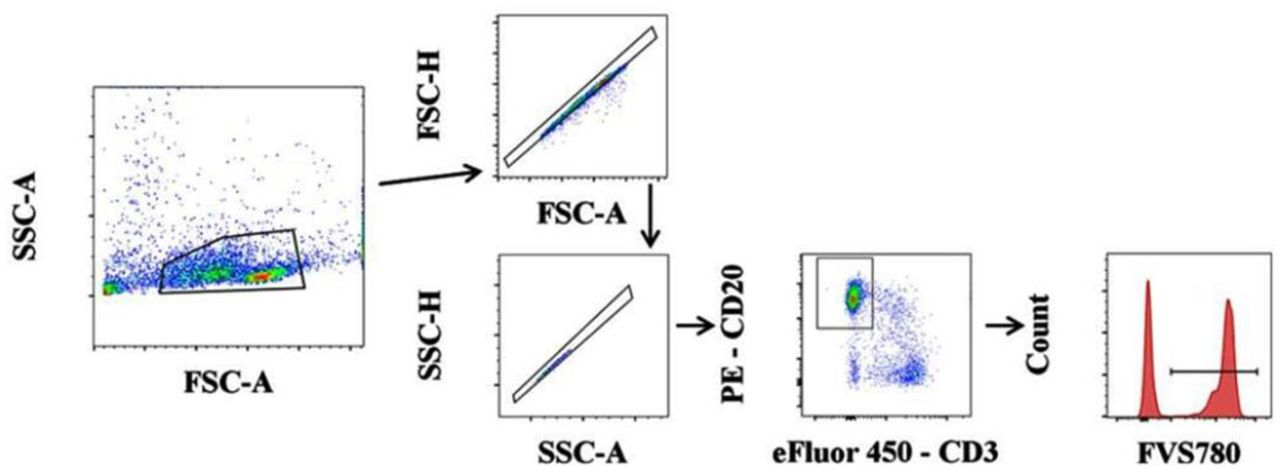In vitro 1D3- or FMC63-CD19CAR-GFP T cell cytolytic activity using C57BL/6 splenocytes. Debris, cell doublets, and clumps were eliminated by FCS-A vs SSC-A gating followed by FSC-A vs. FSC-H and SSC-A vs. SSC-H gating. T and B cells were then identified by CD3 vs. CD20 gating. CD20 positive cells were selected for and gated on FVS-780 to obtain the percentage of live vs. dead target cells. The flow collected data was analysed using Flow Jo v10, for windows and GraphPad Prism software version 8.0.0 for windows (GraphPad Software, California, USA) [ Figure 2 ]