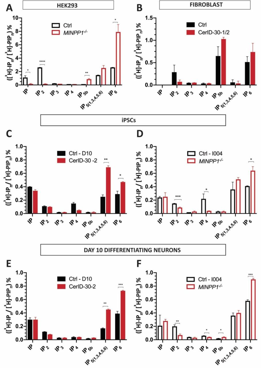 MINPP1 absence leads to disruption in inositol phosphates metabolism. (A-F) SAX-HPLC analysis of inositol phosphate levels in MINPP1 -/- HEK293 cells (A) , patient fibroblasts (CerID-30-1 and CerID-30-2) (B) , patient-derived (CerID-30-2) (C) and MINPP1 -/- iPSCs (D) , and their day-10 differentiating neuron counterparts (E-F) . The peaks ([ 3 H]-IP n ) were identified based on comparison to standards. [ 3 H]-IP n levels are presented as percentage of total radioactivity in the inositol-lipid fraction ([ 3 H]-PIP n ). All error bars represent standard deviation (s.d.). (n=2, Two-tailed student's t-test for HEK293 and fibroblast data; One-way ANOVA for iPSCs and their differentiated counterparts data, Tukey's post hoc test, *, **, ***, **** indicate p values p