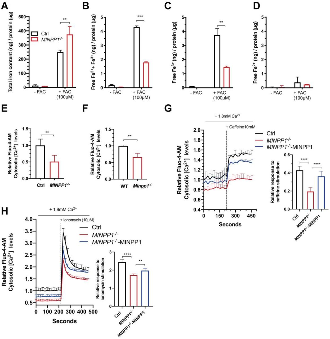 Altered iron and calcium homeostasis in the absence of MINPP1 enzyme in HEK293 and Minpp1 -/- mouse neural progenitor cells. (A-D) Quantification of total iron content ( A ), free iron (Fe 2+ and Fe 3+ ) ( B ), Fe 3+ ( C ) and Fe 2+ ( D ) levels in extracts from control and MINPP1 -/- HEK293 cells grown under low (-FAC) and high iron (+FAC, 100 µM) conditions. All values are normalized to the total protein concentration and represent the mean ± s.d (n=3, Two way ANOVA Sidak test, **, *** indicate p value p