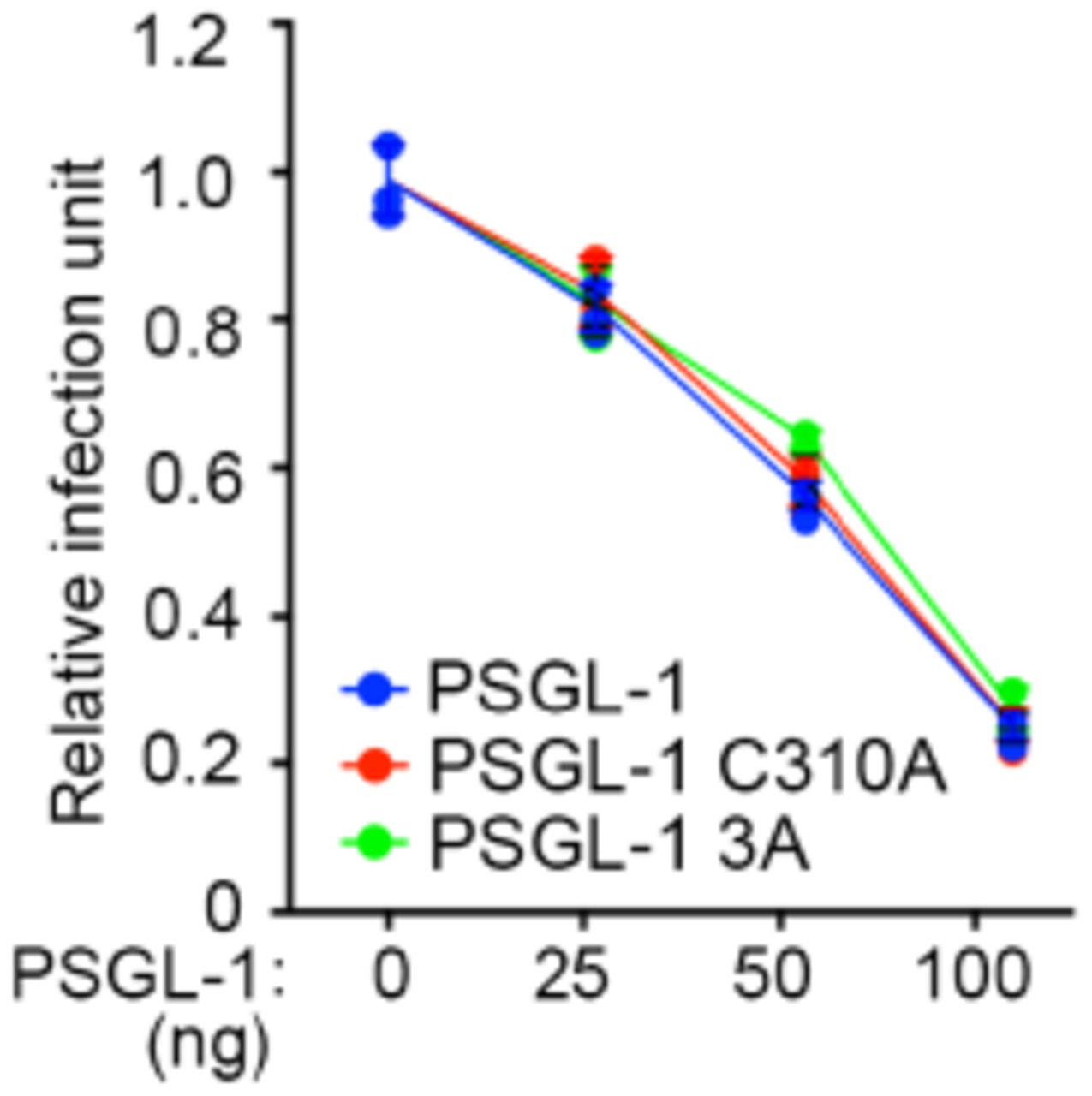 PSGL-1's dimerization-deficient mutation and gap co-clustering-deficient mutations have no effect on its anti-viral activity. a , TZM-bl cells were infected with virions harvested from 293T cells transfected with pNL4-3 plasmids and different amounts of plasmids expressing PSGL-1 or PSGL-1 C336A mutant (dimerization-deficient), PSGL-1 3A mutant (gap co-clustering-deficient ) . The virions were normalized by p24 ELISA before the infection. The infection rates were quantitated with luciferase assays. N=3.