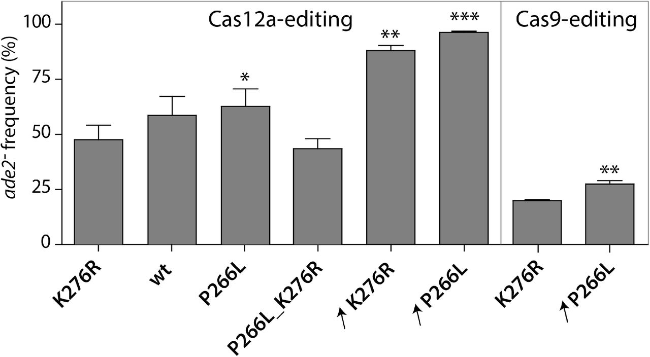 Comparison of Cas9 and Cas12a editing efficiency with T7RNAP variants. Efficiency of ADE2 editing by Cas12- or Cas9-mediated gEL DNA in T7RNAP mutant or overexpression strains: IMX1905 (K276R); IMX2031 (wild-type, wt ); IMX2032 (P266L); IMX2030 (P266L_K276R); IME459 (K276R overexpression, ↗K276R); IME475 (P266L overexpression, P266L). For Cas12a, transformed gDNA corresponds to annealed 15093-15094 oligos. For Cas9, transformed gDNA was obtained by PCR-derived fragment using overlapping primers 16745-16746. Editing efficiency is expressed as percentage of red colonies ( ade2 − ). Values represent the average and standard deviations of data obtained from independent biological duplicates. * P