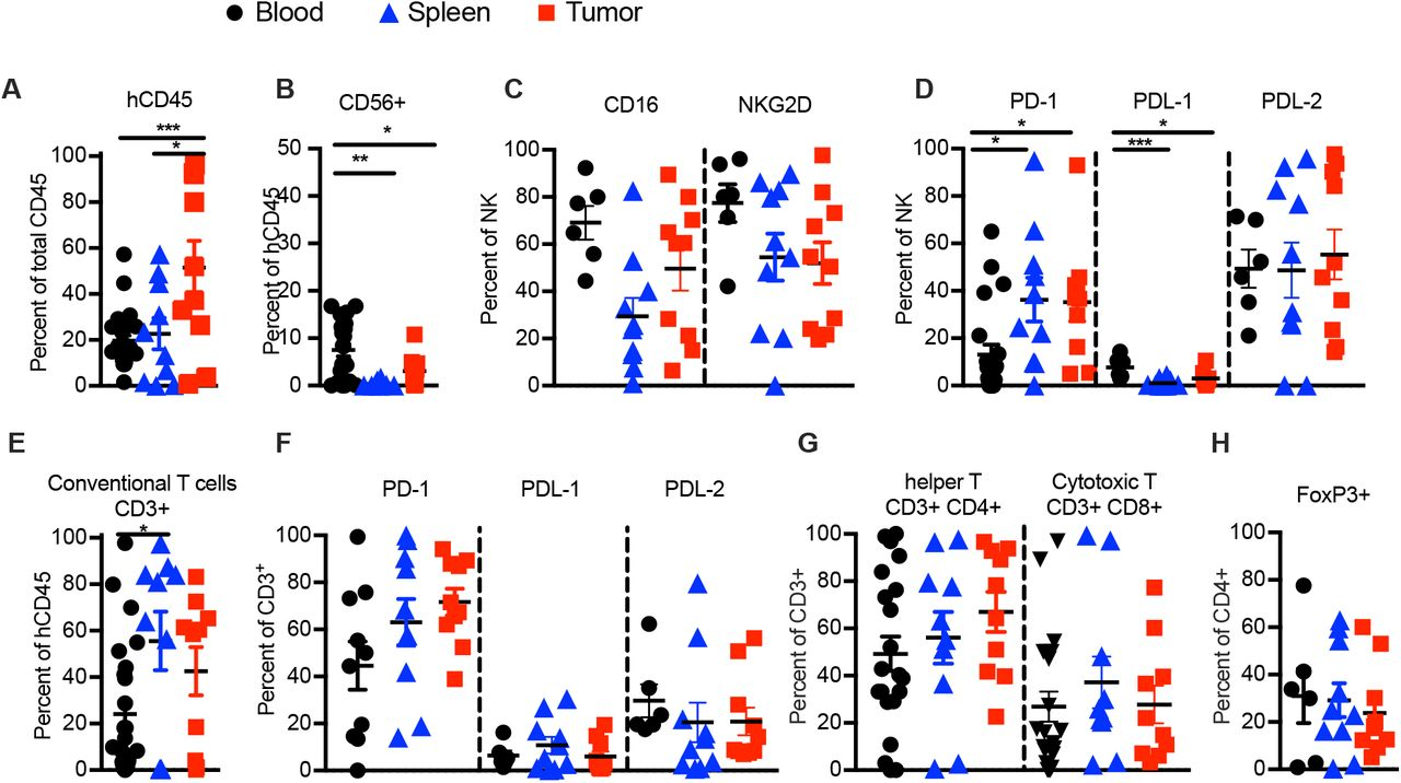 "Immune cells in LUAD-SIS-PDX mice resemble exhausted Tumor Infiltrating Immune cells (TILs) cells of LUAD donors. ( A-H ) Flow cytometry of human immune cells from PBMC, spleen, and transplanted LUAD of PDX mice (""tumor"") analyzed 2-months post-transplant. ( A ) Frequency of human hematopoietic cells (CD45 + ), ( B ) NK cells (CD45 + CD3 − CD56 + ), and ( C ) expression of activating receptors CD16 and NKG2D on NK cells, and ( D ) PD-1, PD-L1 and PD-L2 on NK cells in PDX mouse derived PBMC, spleen and tumor. ( E ) Frequency of conventional T cells (CD45 + CD3 + CD56 − ), and ( F ) expression of PD-1, PD-L1 and PD-L2 on conventional T cells, as well as ( G ) frequencies of T helper (CD45 + CD3 + CD4 + CD8 − CD56 − ) and CTL CD45 + CD3 + CD4 − CD8 + CD56 − ), and ( H ) T-reg (CD45 + CD3 + CD4 + Foxp-3 + CD8 − CD56 − ) subsets in PDX mouse derived PBMC, spleen and tumor. (N = 10 - 23 PDX mice per group from five genetically unrelated human donor cohorts). Data are represented as mean SEM; one-way ANOVA with post-hoc Tukey test *p"