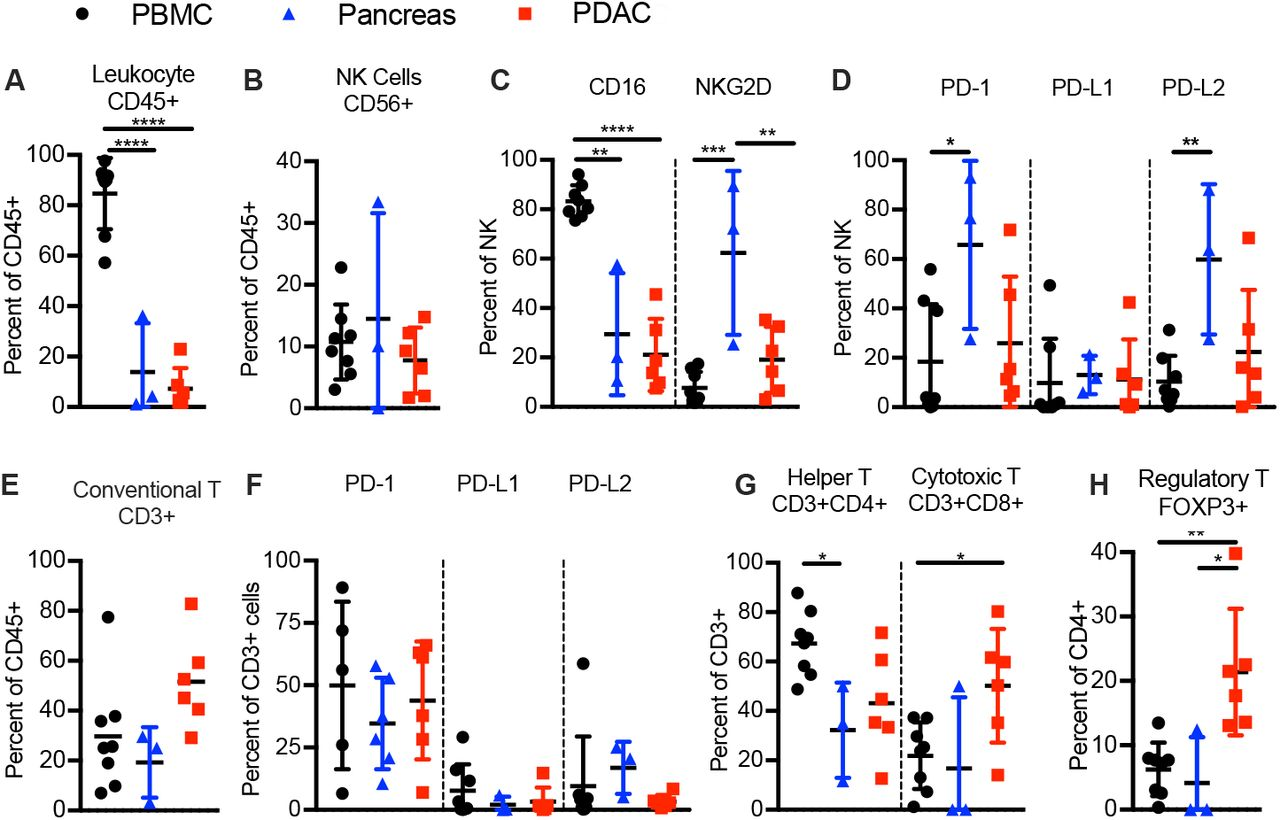 Human PDAC associated NK and T cells are exhausted in phenotype. Frequency of ( A ) human hematopoietic cells (human CD45 + ), ( B ) NK cells (CD45 + CD56 + CD3 − ), ( C ) CD16 and/or NKG2D expressing human NK cells, ( D ) PD-1, PDL-1 and/or PDL-2-expressing human NK cells in in indicated freshly excised tissues of PDAC patients. Frequency of ( E ) human conventional T cells (CD45 + CD56 − CD3 + ), ( F ) PD-1, PDL-1 and/or PDL-2-expressing human T cells in PDAC-patient derived PBMC, pancreas and PDAC. Frequency of ( G ) Th (CD45 + CD3 + CD4 + CD8 − ) and CTL (CD45 + CD3 + CD4 − CD8 + ) as percent of human T cells, and ( H ) Treg (CD45 + CD3 + CD4 − CD8 + Foxp3 + ) as percent of Th cells in PDAC-patient derived PBMC, pancreas and PDAC. Each data point represents one genetically unrelated human donor. Paired t-test for donor-matched lung tissue vs. PDAC, one-way ANOVA with post-hoc Tukey test for comparisons between PDAC-patient derived PBMC, pancreas tissue and PDAC. *p