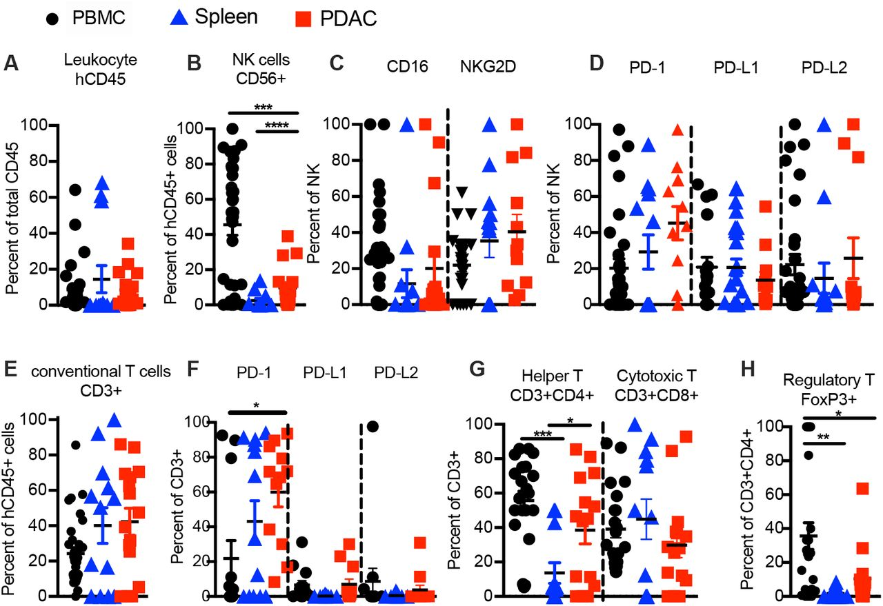 Immune cells in PDAC-SIS-PDX mice resemble exhausted TILs of PDAC donors. ( A-H ) Flow cytometry of human immune cells from PBMC, spleen, and transplanted PDAC of PDX mice analyzed 4-6 months post-transplant. ( A ) Frequency of human hematopoietic cells, ( B ) human NK cells (CD45 + CD56 + CD3 − ), and ( C ) expression of activating receptors CD16 and NKG2D as well as ( D ) markers of exhaustion PD-1, PD-L1 and PD-L2 on NK cells in PDX derived PBMC, spleen and transplanted PDAC. ( E ) Frequency of conventional T cells (CD45 + CD56 − CD3 + ) and ( E ) expression of PD-1, PD-L1 and PD-L2 on conventional T cells, ( G ) frequencies of Th (CD45 + CD3 + CD4 + CD8 − ), and CTL (CD45 + CD3 + CD4 − CD8 + ) as percent of T cells, and ( H ) Treg (CD45 + CD3 + CD4 − CD8 + Foxp3 + ) as percent of Th cell subsets in PDX derived PBMC, spleen, and transplanted PDAC. Each data point represents one PDAC-SIS-PDX mouse tissue (n= 12-33 PDX mice per group, seven donor-cohorts). Data are represented as mean SEM; Paired t-test for donor-matched lung tissue vs. PDAC, one-way ANOVA with post-hoc Tukey test *p