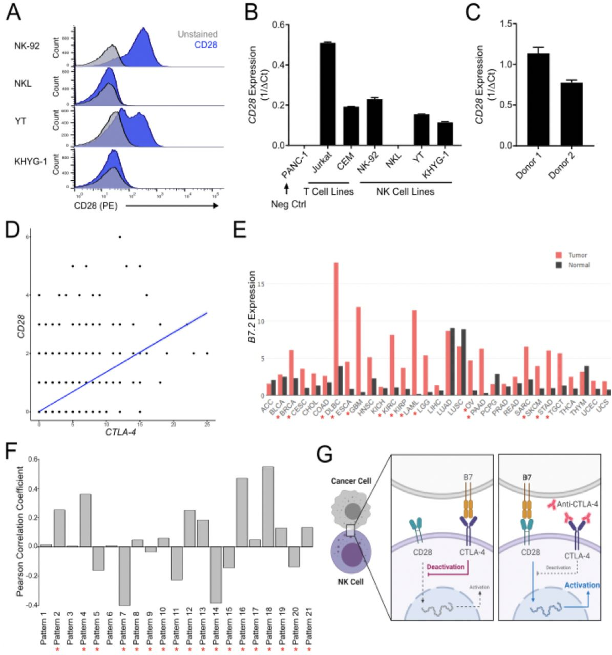 CD28 and CTLA-4 are coexpressed in circulating and tumoral NK cells. A. Flow cytometry for surface expression of CD28 in NK cell lines (NK-92, NKL, YT, KHYG-1). B. qRT-PCR analysis of CD28 expression in a CD28 null line (PANC-1), T cell lines (Jurkat, CEM), NK cell lines (NK-92, NKL, YT, KHYG-1). C. qRT-PCR demonstrating CD28 expression in CD56+ selected ex vivo unstimulated NK cells derived from PBMCs from healthy human donors. D. scRNAseq data demonstrating positive correlation (R 2 = 0.33, p = 0) between CD28 gene expression and CTLA-4 gene expression in human natural killer cells. E. B7.2 (CD86) mRNA expression levels in primary tumors versus paired normal (TCGA). Red asterisk (*) indicates cancer types with significantly overexpressed CD86 in tumor compared to normal tissue. F. Pan-cancer TCGA data demonstrating a negative correlation between pattern 7 weight and B7.2 expression. Significant correlation coefficients are indicated by a red asterisk (*). G. Schematic demonstrating proposed mechanism by which anti-CTLA-4 antibodies may enhance NK cell-mediated tumor clearance.