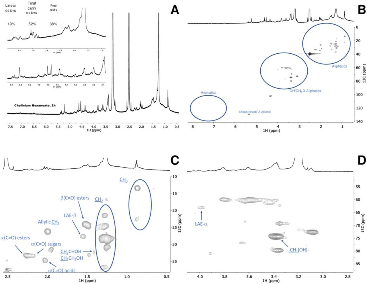 Wide-ranging NMR spectral characterisation of cutin isolated with cholinium hexanoate (2 h). The 1 H NMR, with inserts focussing the aliphatic and oxygenated aliphatics regions (A); and the HSQC spectrum: full (B) and regions corresponding to aliphatics (C) and CH/CH 2 -X aliphatics (D) of the purified cutin. Some correlations (unlabelled) are uncertain or unidentified.