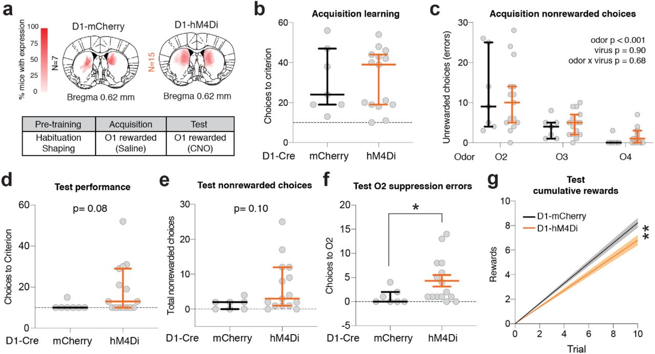 iSPN chemogenetic inhibition does not significantly affect Test Phase reward accumulation compared to D2-mCherry control mice. Linear regression lines fit to first 10 choices of Test Phase with 95% confidence bands plotted. D2-mCherry and D2-hM4Di regression slope estimates overlapped at the 95% confidence interval.