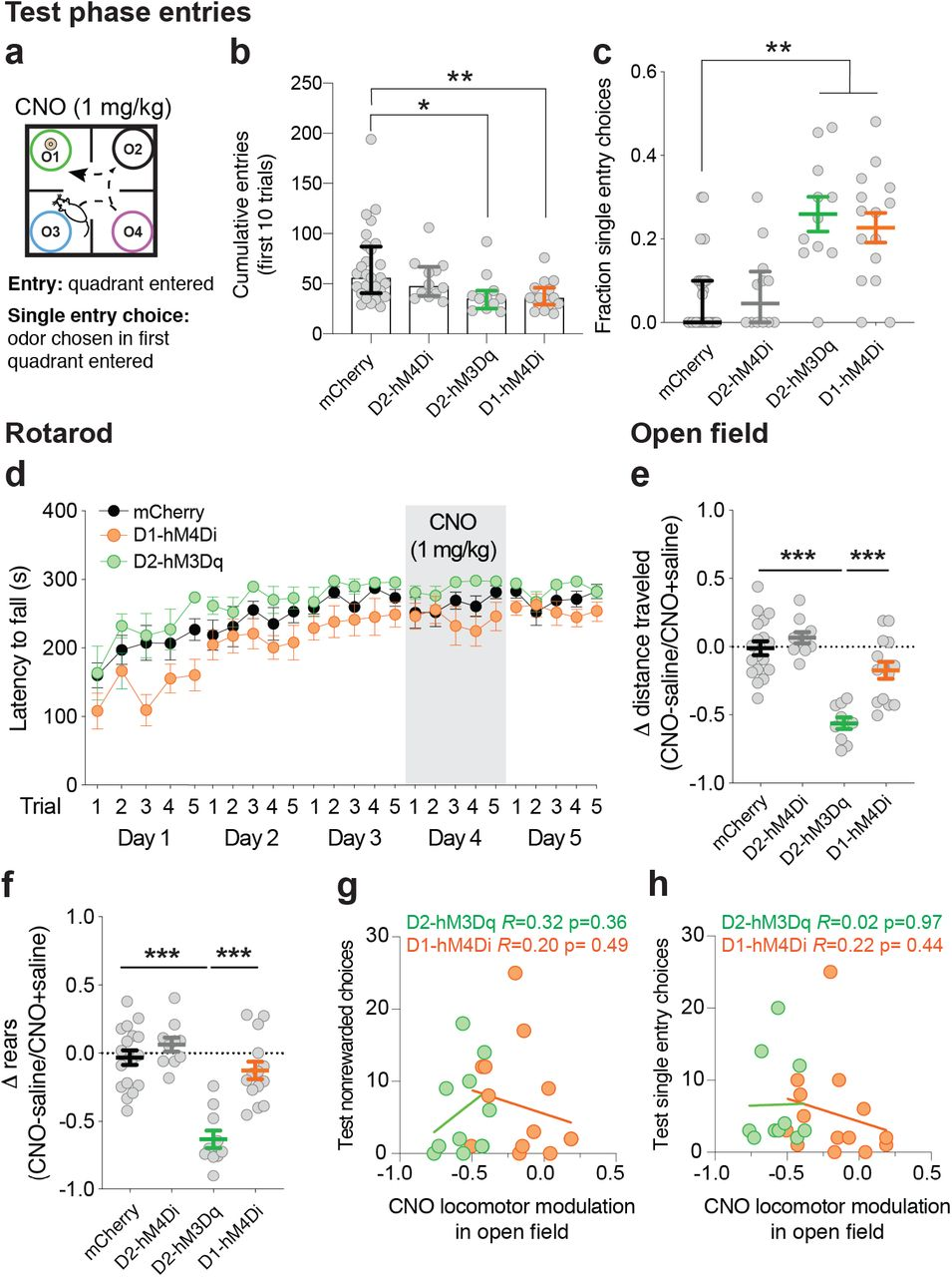 Chemogenetic manipulation of DMS direct and indirect pathway neurons reduced entries and increased single trial choices. Outside of the task context, chemogenetic manipulation spared rotarod performance but did affect open field locomotion in a manner uncorrelated with task choice effects. ( a ) Test Phase quadrant entries. ( b ) D2-Cre mice expressing activating DREADD (D2-hM3Dq) or D1-Cre mice expressing inhibitory DREADD (D1-hM4Di) made fewer entries during Test Phase on CNO compared to mCherry control mice on CNO (*p