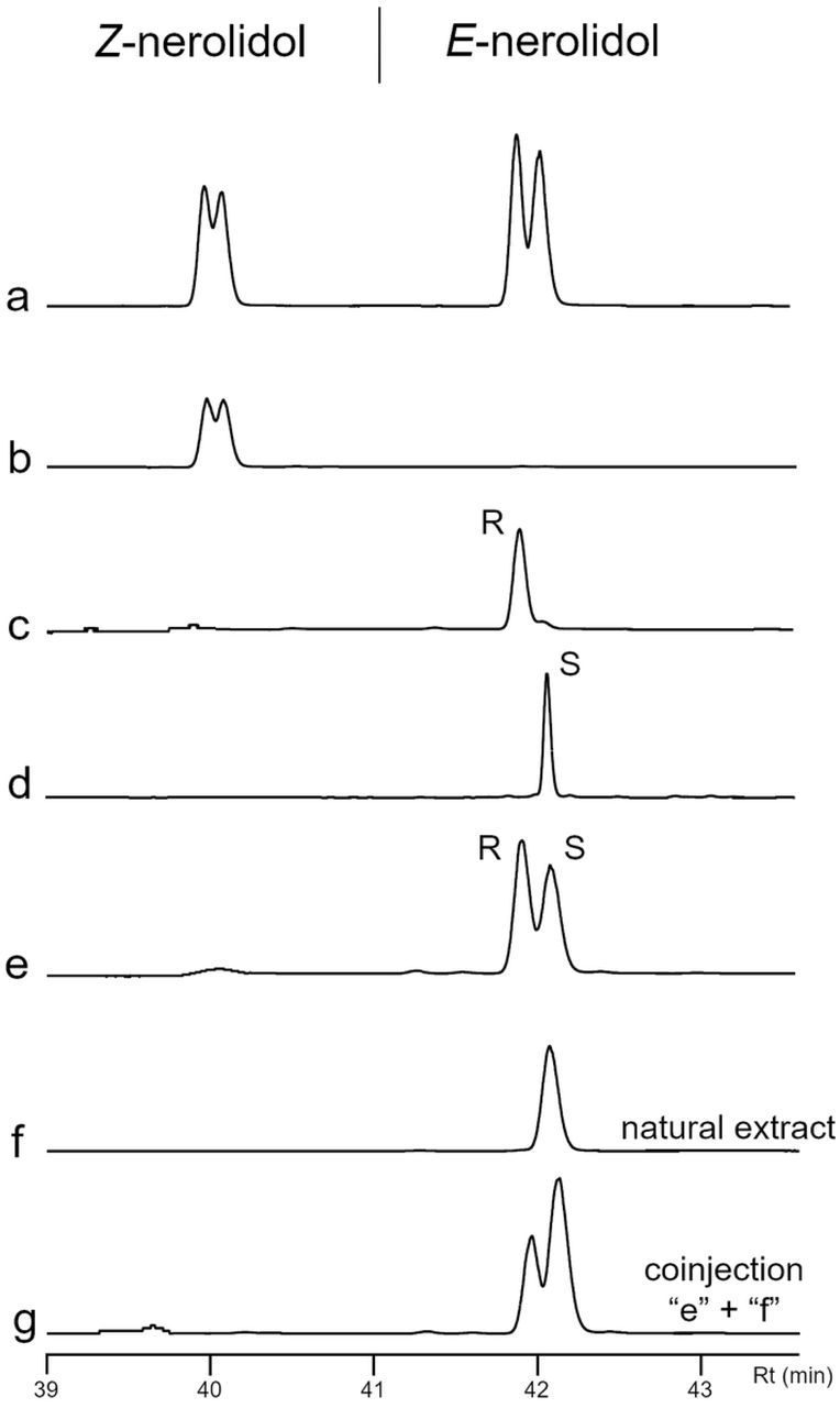 """Analysis of bottle gourd flowers, Lagenaria siceraria , extract, and synthetic isomers of <t>nerolidol</t> by gas chromatography equipped with a chiral column. a) Z and E -nerolidol (left to right) isomers of nerolidol (a mix of isomers); b) Z -nerolidol isomers; c) Synthetic ( 3R,6E )-nerolidol (gift from Dr. Robert Hanus, Czech Republic); d) ( E )-nerolidol from Sigma-Aldrich; e) Mix of 40 ng from each ( 3R,6E )-nerolidol and ( 3S,6E )-nerolidol; f) Natural extract from VOCs of L. siceraria flowers; g) Coinjection of """"e"""" and """"f"""" chromatogram extracts."""