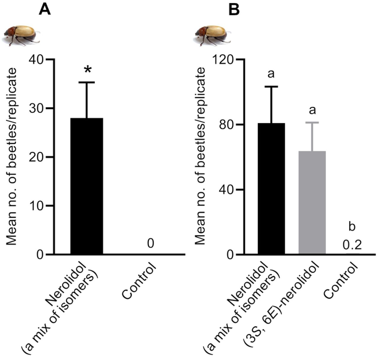 Mean number of Cyclocephalini beetle, Cyclocephala paraguayensis , caught per replicate in field experiments conducted in Cassilândia, MS, Brazil. Treatments: Nerolidol (a mix of isomers) = mixture of four isomers of nerolidol; (3 S , 6 E )-nerolidol = synthetic nerolidol, which is identical to the stereoisomer of nerolidol produced by L. siceraria flowers. A) Mean number of adults of C. paraguayensis caught per replicate of nerolidol-baited traps and controls. *Treatment is significantly different at P