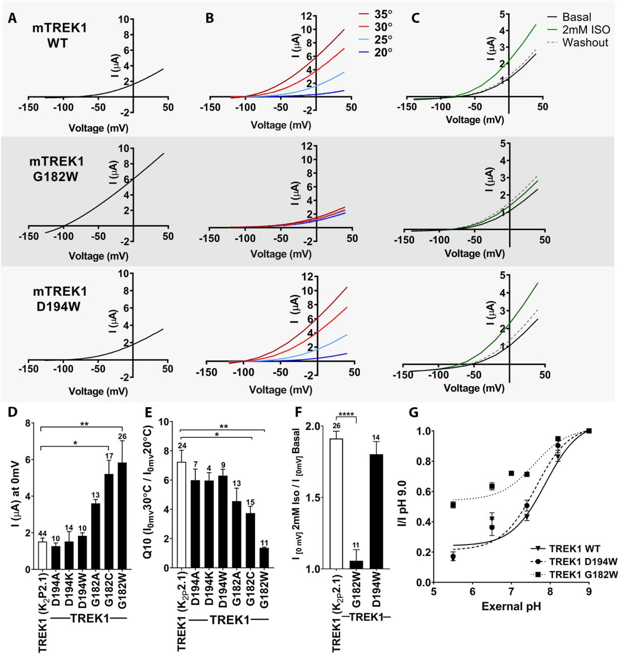 Mass spectrometry analysis of purified zebrafish TREK1. Results of MS analysis of TREK1 WT in the (top) absence of reaction with Azi-isoflurane, (second) following reaction with 30 μM Azi-isoflurane, (third) following reaction with 30 μM Azi-isoflurane in the presence of 3mM Isoflurane, or (bottom) TREK1 G182W following reaction with 30 μM Azi-isoflurane. Regions positively identified by mass spectrometry analysis are shown in red in the TREK1 structural model (PDB ID 6CQ6) and in black font in the sequence data. Regions absent from MS data occurred in five distinct regions, all of which are displayed in matching color in both the structural model and the sequence data. The G182 and K194 residues found to be modified by azi-isoflurane in TREK1 WT are shows as pink spheres in the structural model, and positive photolabeling is denoted in the sequence data by enlarged font and pink color. The A67 and T303 residues modified by azi-isoflurane in TREK1 G182W are similarly denoted in blue. The initial and final residues in the TREK1 protein were not identified in the majority of the MS results and are shown in grey to denote absence from positive MS identification. These residues are not present in the TREK1 structural model.
