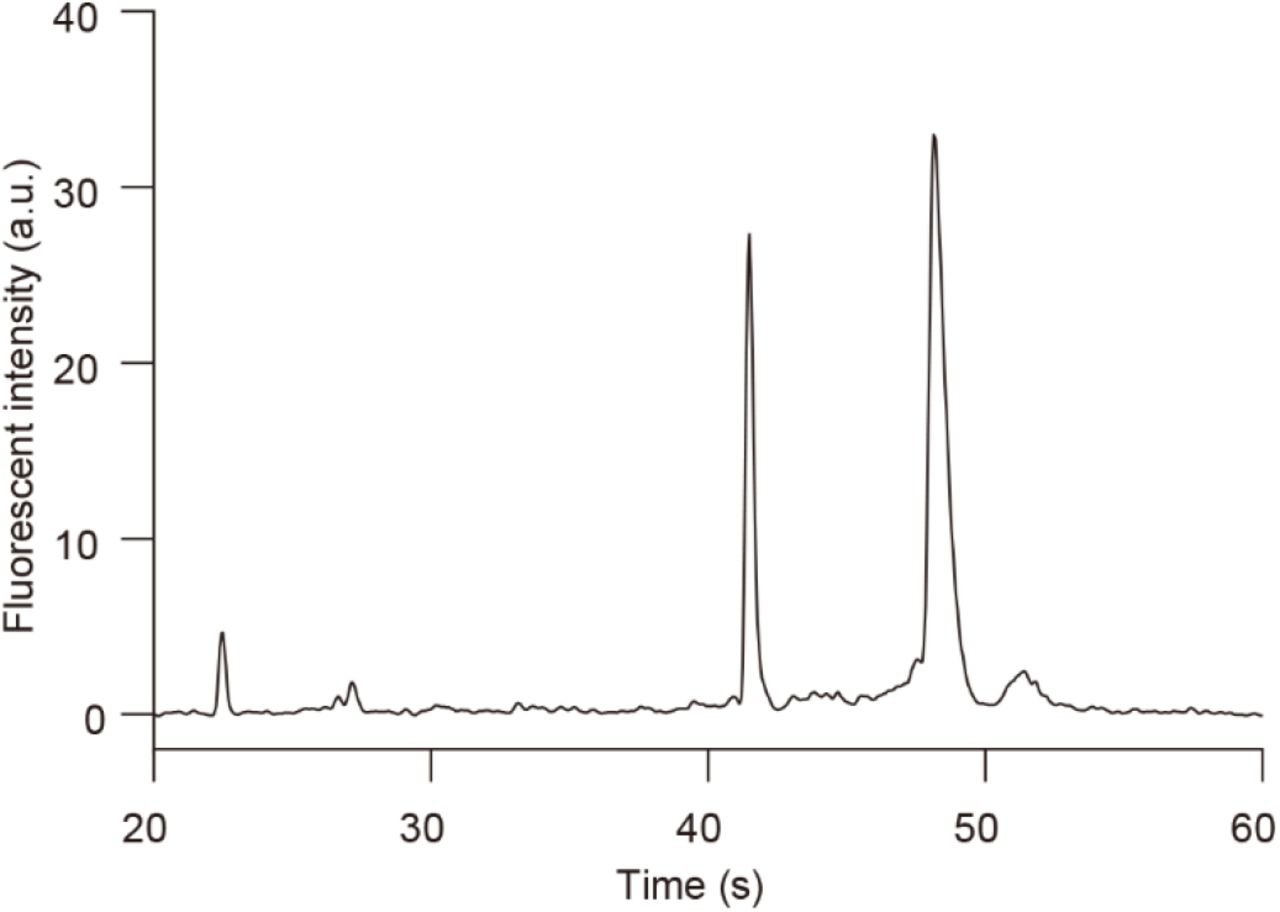 Typical electropherogram of total RNA obtained from Caco-2 cells cultured on a chip with Agilent 2100 Bioanalyzer. The electropherogram shows that 18S and 28S ribosomal RNA (rRNA) bands were clearly detected without smeared bands, and the RNA integrity number (RIN), which is used to standardise RNA quality control, was over 7.0. This result indicates that the total RNA harvested from the chip was sufficient to be applied to RNA sequencing.