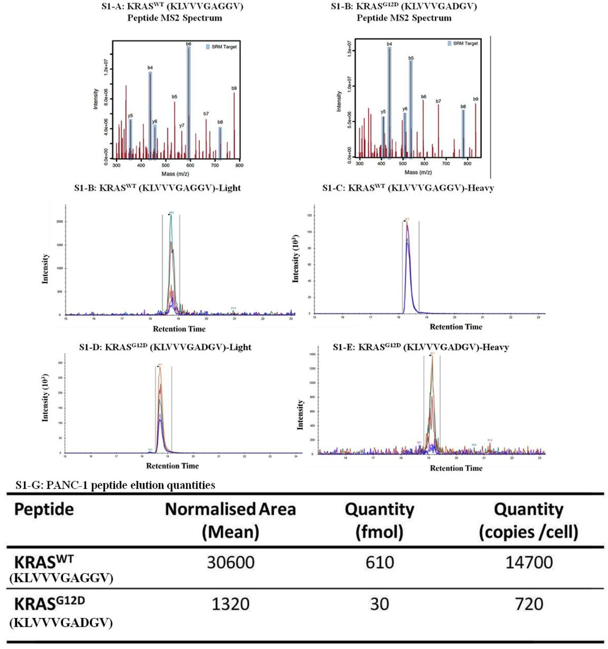 Mass spectrometry analysis of HLA-A*02:01-restricted KRAS wt (KLVVVGAGGV) and KRAS G12D (KLVVVGADGV) aa5-14 peptides eluted from PANC-1 cells. Product-ion peaks for the for KRAS wt and KRAS G12D amino-acid 5-14 peptides, respectively ( Figure S1-A, -B ). Peak areas for the synthetic peptide standard ( Figure S1-C, -D ), and the corresponding peak areas for peptide eluted from Panc1 cells ( Figure S1-E, -F ). The area values and quantities of both KRAS WT and KRAS G12D -specific HLA*02:01-restricted peptides eluted off PANC-1 cells ( Figure S1-G ). Although it was less abundant than the KRAS wt peptide, the HLA-A*02:01-restricted KRAS G12D peptide can be naturally processed and presented by cells which carry the KRAS G12D mutation and the HLA-A*02:01 allele.