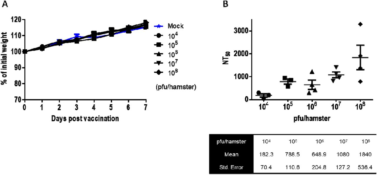 Dose-dependent vaccination of hamsters with rVSV-ΔG-spike. (A) Body weight changes of mock-vaccinated hamsters (n=4), and hamsters vaccinated with rVSV-ΔG-spike ranging from 10 4 to 10 8 pfu/hamster (n=8, n=10, n=10, n=10, n=8, for each vaccinated group, respectively). (B) NT 50 values of neutralization of SARS-CoV-2 by sera from hamsters following i.m. vaccination with rVSV-ΔG-spik ranging from 10 4 to 10 8 pfu/hamster. n=4 for each group. Means and SEM are indicated below the graph.