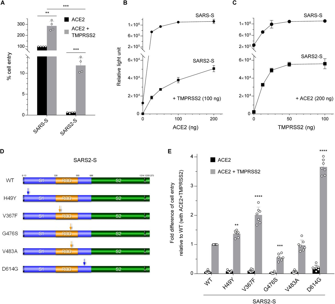 <t>ACE2</t> expression alone is insufficient to support SARS2-S-mediated cell entry.