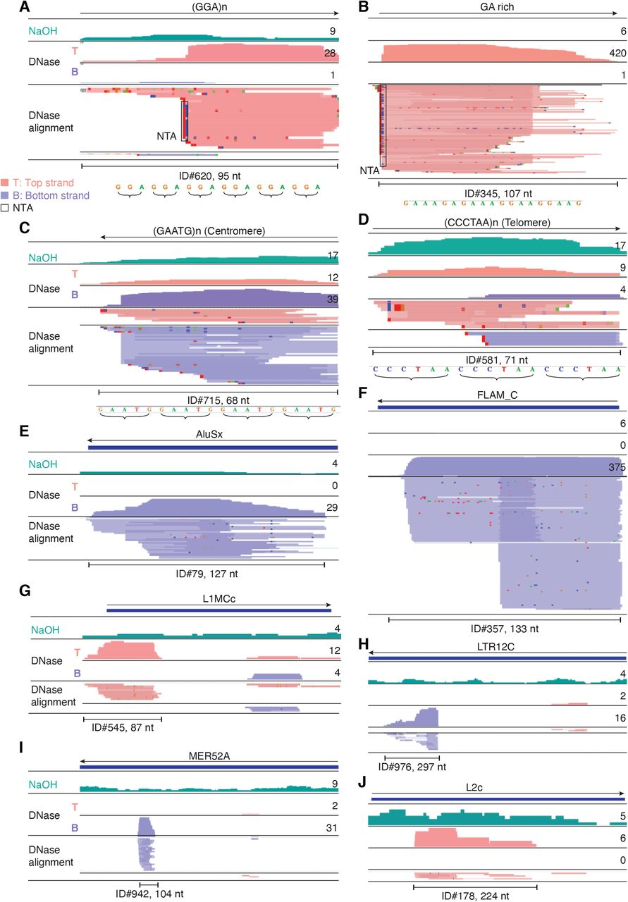 IGV screenshots showing examples of repeat and retrotransposable element RNAs detected in plasma by TGIRT-seq. ( A-D ) Simple repeats, including centromeric and telomeric repeats. ( E-J ) Retrotransposable element RNAs. The repeat or transposable element RNA is named at the top with an arrow below indicating the 5' to 3' orientation of the RNA. The tracks below show coverage plots and read alignments for the peak region in combined datasets for NaOH-treated plasma DNA (n=4; combined top and bottom strands (turquois)) or DNase-treated plasma RNA (n=15; Top strand (T), pink and Bottom strand (B), purple) based on the number of deduplicated reads indicated to the right. Colors other than pink or purple in the read alignments indicate bases that do not match the reference sequence (red, green, blue, and brown indicate thymidine, adenosine, cytidine, and guanosine, respectively). The peak called by MACS2 is delineated by a bracketed line below the alignments with the peak ID and length indicated below. Close ups of simple repeat sequences (not to scale) are shown below the peak ID. AluSx, Alu subfamily Sx; FLAM_C, free left Alu monomer subfamily C; L1MCc, mammalian-wide LINE-1 (L1M) family Cc; LTR12C, LTR element 12C; MER52A, medium reiteration frequency interspersed repeat LTR from ERV1 endogenous retrovirus; L2c, LINE-2 family c; NTA/black boxes, non-templated nucleotides added by TGIRT-III to the 3' end of cDNAs during TGIRT-seq library preparation, appearing at the 5' end of the RNA sequence.