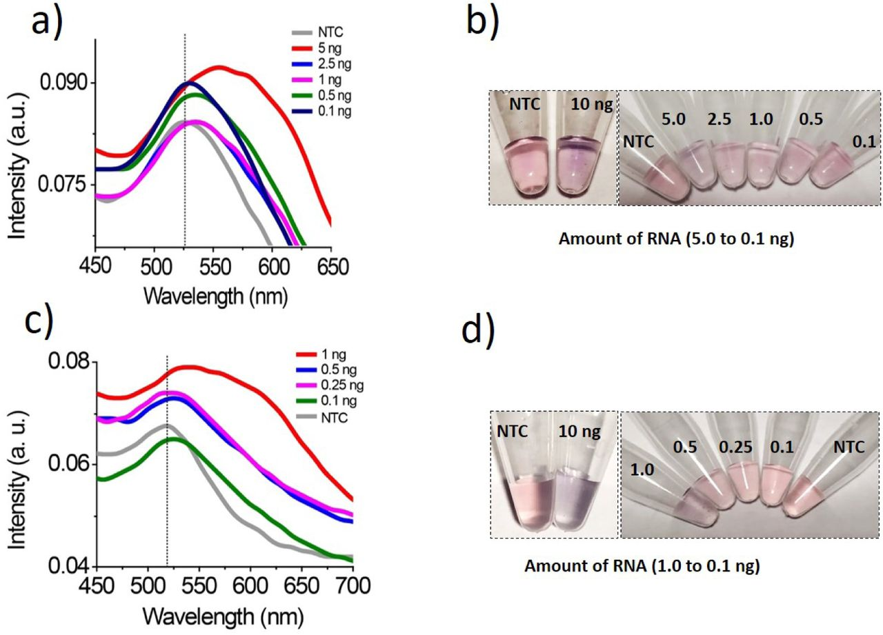 Sensitivity of developed assay to detect SARS-CoV-2 RNA. Assay sensitivity was determined using different concentrations (concentration are in ng) of IVT synthesized SARS-CoV-2 RNA (a-b) , or nCOVID synthetic DNA (c-d) . Absorption spectra (a and c) corresponding to aggregated colloids exhibit a clear red-shift in peak with broadening, indicating successful hybridization. Optical pictures (b d) of the assay performed to demonstrate the color change, an extra pair of vials (on the left) to show color change with a higher amount (10ng) of target nucleic acid for the reference.