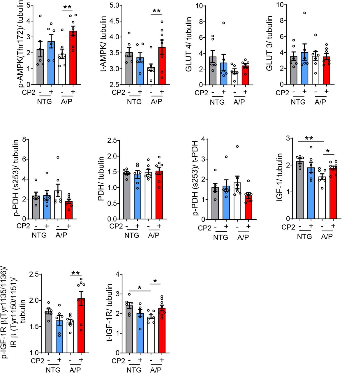 CP2 treatment improves glucose uptake and utilization in APP/PS1 mice. Western blot quantification of protein levels relevant to IGF-1 signaling pathway in the brain tissue of CP2- and vehicle-treated APP/PS1 and NTG mice after 13 - 14 months of treatment. Significance was determined by two-way ANOVA with Fisher`s LSD post-hoc test. A/P, APP/PS1; NTG, non-transgenic littermates. Data are presented as mean ± S.E.M. *P