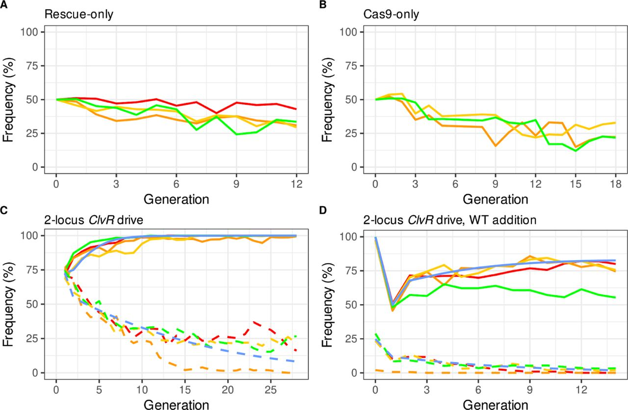 Population behavior of 2-locus drive components Rescue tko and Cas9/ Cleaver alone and together as a complete 2-locus 50cM ClvR V2 element. Behavior of Rescue -only (A) and Cas9/Cleaver-only (B) behavior in a WT ( w 1118 ) background. (C) Genotype frequencies of Rescue tko (solid lines) and Cas9/Cleaver (dashed lines) when introduced together as a complete 2-locus 50cM ClvR V2 element , in four replicates (red, green, orange, and yellow). Predicted drive behavior from a model in which Rescue tko and Cleaver have additive fitness costs of 6.5% and 7.5%, respectively, are shown a blue lines (see methods for details). (D) Drive populations from (C) to which a 50% WT addition was made following generation 15.