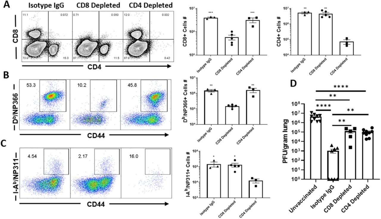 CD4 and CD8 T cells are required for protective immunity to influenza A virus. C57BL/6 mice were vaccinated twice (at 3 weeks interval) with NP protein formulated in ADJ+GLA. At 70 days after booster vaccination, mice were challenged intranasally with <t>H1N1/PR8</t> strain of influenza A virus; unvaccinated mice were challenged as controls. Cohorts of vaccinated virus-challenged mice were treated (intravenously and intranasally) with isotype control IgG, anti-CD4 or anti-CD8 antibodies at days -5, -3, -1 and 1, 3 and 5, relative to viral challenge. On the 6 th day after viral challenge, virus-specific T cells and viral titers were quantified in lungs. (A) FACS plots are gated on live lymphocytes and numbers are percentages among live lymphocytes. (B) FACS plots are gated on CD8 T cells and numbers are percentages of D b /NP366 tetramer-binding CD8 T cells among CD8 T cells. (C) FACS plots are gated on CD4 T cells and numbers are percentages of I-A b /NP311 tetramer-binding CD4 T cells among CD8 T cells. (D) Viral titers in lungs were quantified by a plaque assay. Data are from two independent experiments. *, **, and *** indicate significance at P