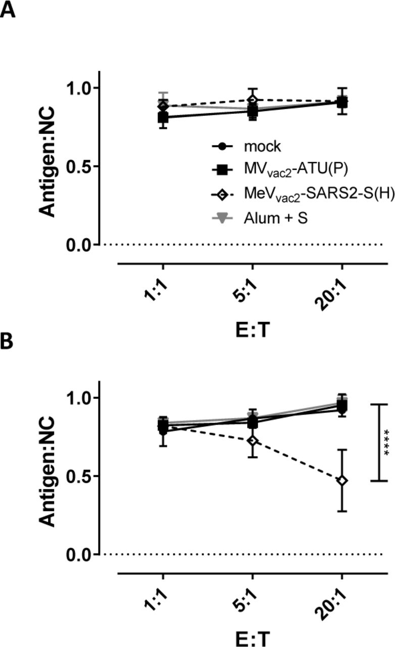 Antigen-specific killing activity of SARS-CoV-2 S-specific T cells. Killing assay using splenocytes of mice vaccinated on days 0 and 28 isolated 21 days after the second immunization. Splenocytes were co-cultured with DC2.4 ( A ) or with antigen-presenting DC2.4-SARS2-S ( B ) cells or for 6 days. Activated CTLs were then co-cultured with EL-4 green -SARS2-S target cells (Antigen) and EL-4 red control cells (NC) at indicated E:T ratios for 4 h. Ratio of living target to non-target cells (Antigen:NC) was determined by flow cytometry. Depicted are means and standard deviation of each group (open diamonds, MeV vac2 -SARS2-S(H); filled circles, mock; filled squares, MV vac2 -ATU(P); grey triangles: S protein + Alum) (n = 3 - 5). For statistical analysis of grouped ELISpot data, two-way ANOVA analysis was applied with paired Tukey's Multi comparison test used as post hoc test. ****, p
