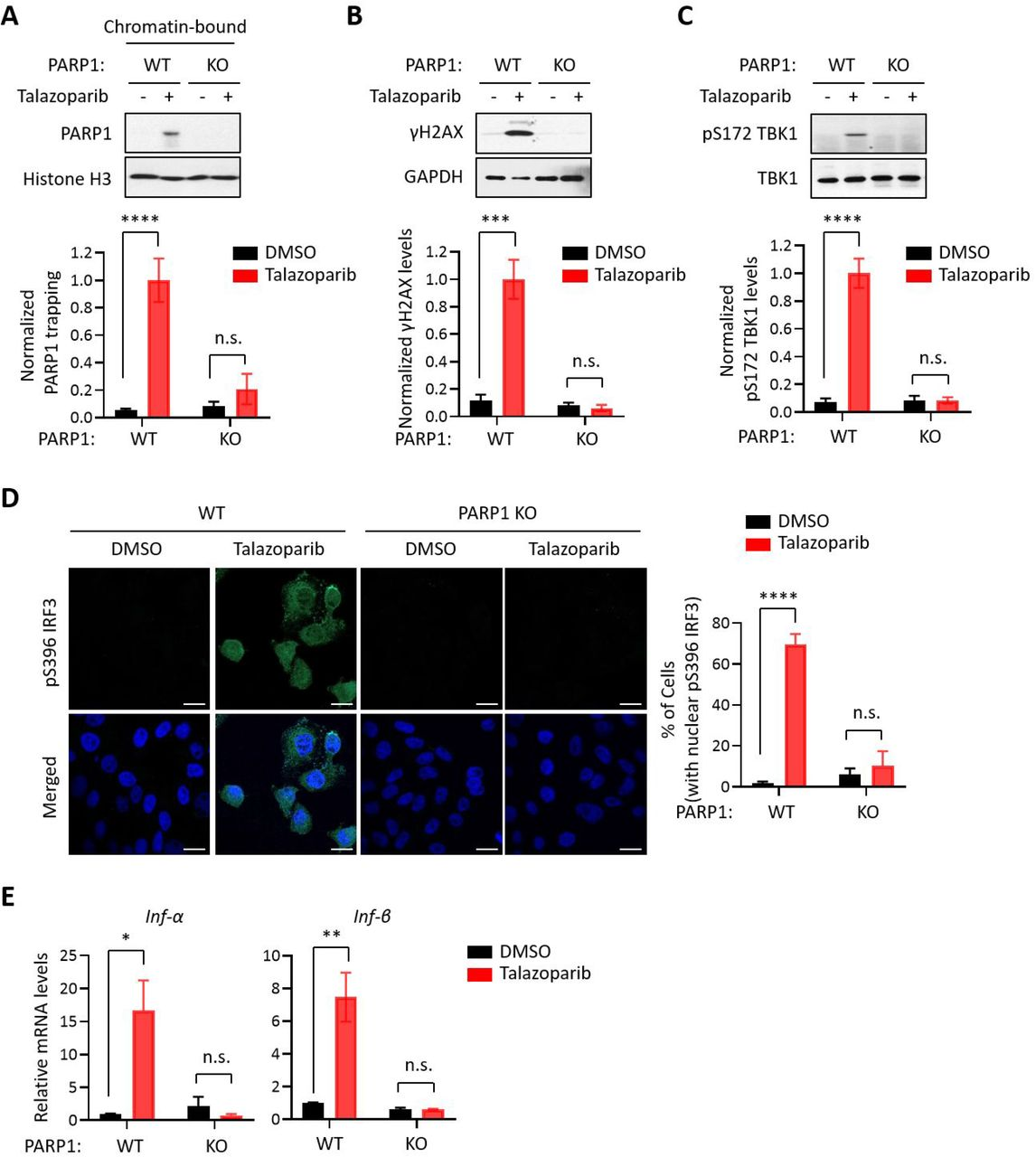The PARP1 protein is required for PARPi-induced innate immune signaling. (A) PARPi-induced PARP1 trapping in wild-type (WT) and PARP1 knockout (KO) HeLa cells. Cell were also treated with or without Talazoparib (10 μM for 72 hrs). Top, chromatin-bound fractions were isolated and were probed using the indicated antibodies. Histone H3 was used as the loading control. Bottom, the graph shows the quantification of the level of PARP1 trapping. Values were presented as means ± SD from three biological replicates. Significance was determined with two-way ANOVA. ****p