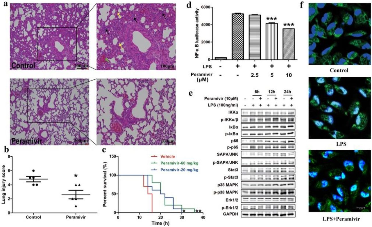Peramivir inhibits <t>cytokine</t> release in LPS-induced hPBMCs from a health donor. TNF-α concentration was elevated by LPS stimulation. a and b Peramivir reduced TNF-α and IL-10 release in a time (6 and 12 h)- and dose (2.5, 5, 10 μM)-dependent manner. Peramivir showed no toxicity toward hPBMCs. * P
