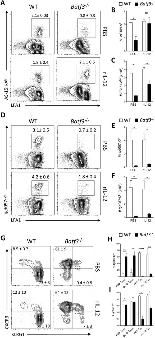 An IL-12 independent role for cDC1s in the CD8 + T cell response to CPS (A-I) WT and Batf3 -/- mice were immunized with 10 5 CPS parasites followed by i.p. administration of either PBS or 200 ng rIL-12 at 0, 24, and 48 hpi. T cell responses in the peritoneum were assessed via flow cytometry at 11 dpi. (A) Representative plots of AS15:I-A b+ CD4 + T cells. (B-C) The fraction and number of AS15:I-A b+ CD4 + T cells. (D) Representative plots of tgd057:K b+ CD8 + T cells. (E-F) The fraction and number of tgd057:K b+ CD8 + T cells. (G)Representative plots of the T eff and Tmem phenotypes of tgd057:K b+ CD8 + T cells. (H-I) The fraction and number of Tmem or T eff phenotypes of tgd057:K b+ CD8 + T cells. Data (n = 3-5) represent 1 experiment out of 2 independent experiments. All representative plots indicate mean ± SD. All statistical comparisons were unpaired Student's t test. ns, not significant; *p