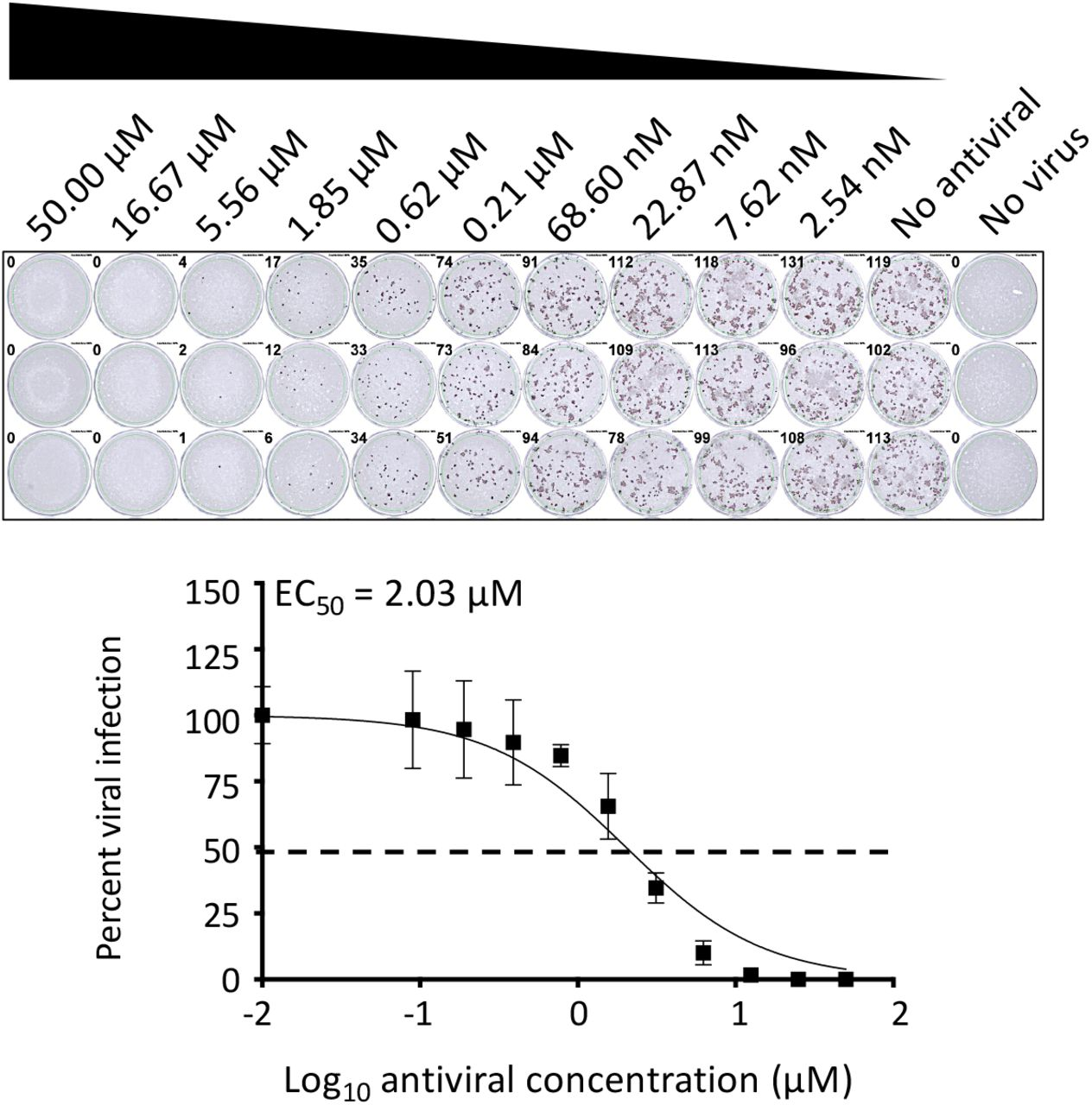 A PRMNT assay to identify SARS-CoV-2 antivirals, peroxidase staining: Confluent monolayers of Vero E6 cells (96-well plate format, ~4 x 10 4 cells/well, triplicates) are infected with ~100-200 PFU/well of SARS-CoV-2. After 1 h of virus adsorption, media is replaced with fresh infection media containing 1% Avicel and 2-fold serially diluted drugs. Cells in row 11 are incubated with virus only and cells in row are mock-infected and are used as internal controls in each of the plates. At 24 h p.i., cells are fixed with 10% formalin solution. After 24 h fixation, cells are washed 3X with PBS and incubated with 1μg/mL of a SARS-CoV-1 cross-reactive NP mAb (1C7) at 37°C. After 1 h incubation with the primary mAb, cells are washed 3X with PBS and incubated with a secondary POD anti-mouse Ab (diluted according to the manufacturer's instruction) at 37°C. After 30 minutes incubation with the secondary Ab, cells are washed 3X with PBS and developed with the DAB substrate kit. Positive staining plaques in each of the wells are quantified using an ELISPOT plate reader. The effective concentration 50 (EC 50 ) is calculated as the highest dilution of the mAb, pAb or sera that prevents 50% plaque formation in infected cells, determined by a sigmoidal dose response curve. Dotted line indicates 50% neutralization. Data were expressed as mean and SD from triplicate wells.