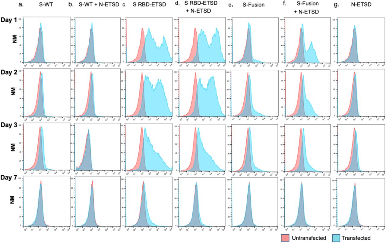 Transfection of HEK293T cells with hAd5 S-Fusion + ETSD results in enhanced surface expression of the spike receptor binding domain (RBD). Flow cytometric analysis of an anti-RBD antibody with construct-transfected cells reveals no detectable surface expression of RBD in either (a) S-WT or (b) S-WT + N-ETSD transfected cells. Surface RBD expression was high for S RBD-ETSD and S RBD-ETSD + N-ETSD (c, d). Expression was low in (e) S-Fusion transfected cells. Cell surface expression of the RBD was high in (f) S-Fusion + N-ETSD transfected cells, particularly at day 1 and 2. (g) No expression was detected the N-ETSD negative control. Y-axis scale is normalized to mode (NM).