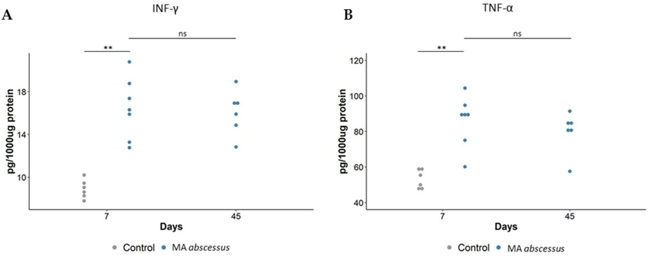 Cytokines/chemokines recruitment during MA subsp. abscessus chronic lung infection. ( A ) IFN-γ, ( B ) <t>TNF-α,</t> measured by Mouse Milliplex, were quantified in total the lung of mice. At 7 and 45 days, dots represent cells in individual mice selected from the group of infected mice with MA subsp. abscessus . The data were pooled from two independent experiments. For MA subsp. abscessus , statistical time effect was evaluated with Mann-Whitney Test. Statistical comparison between MA subsp. abscessus and control mice at Day 7 was calculated with Mann-Whitney Test. *p