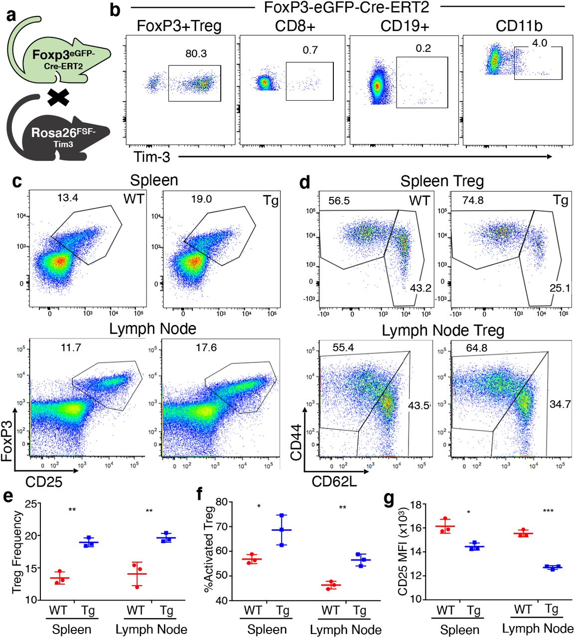 More-restricted expression and Treg activation phenotype of FoxP3-eGFP-Cre-ERT2 x FSF-Tim3 mice. (a) Crosses used to generate FoxP3-eGFP-Cre-ERT2 x FSF-Tim-3 mice. (b) Tim-3 transgene expression is restricted to CD4 + Treg when driven by the tamoxifen-inducible Cre. (c) Proportion of FoxP3 + CD25 + Treg in spleen and LN of Tim-3 Tg vs. WT (Cre only) animals. (d) Activation status of Treg from the Tim-3 Tg vs. WT animals. (e) Quantitation of Treg frequency (among CD4 + T cells). (f) Quantitation of activated (CD44 + CD62L − ) Treg. (g) Levels of expression of CD25 (based on MFI of flow cytometry data). Mice were analyzed at 6-8 weeks of age. Representative of three experiments with 3-4 mice per experiment.