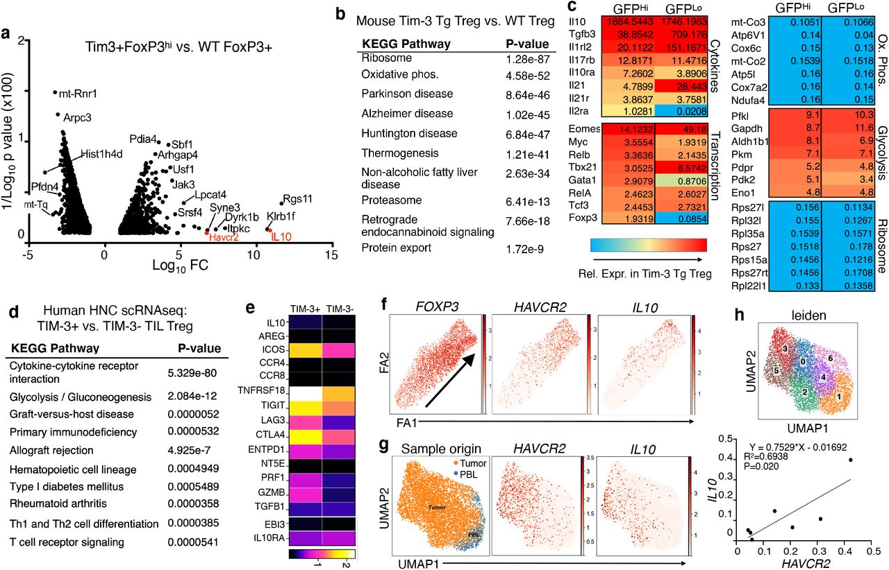 Effects of enforced Tim-3 expression on Treg gene expression. (a) Volcano plot of RNA sequencing data comparing Tim-3 + FoxP3 hi cells from Tg animals to FoxP3 + cells from WT (Cre-only) animals. Only comparisons with a p value