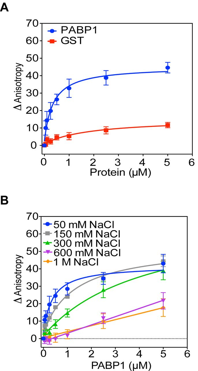 Influenza A Virus NS1 Protein Binds As A Dimer To The RNA-free PABP1 But Not  To The PABP1•Poly(A) RNA Complex | BioRxiv
