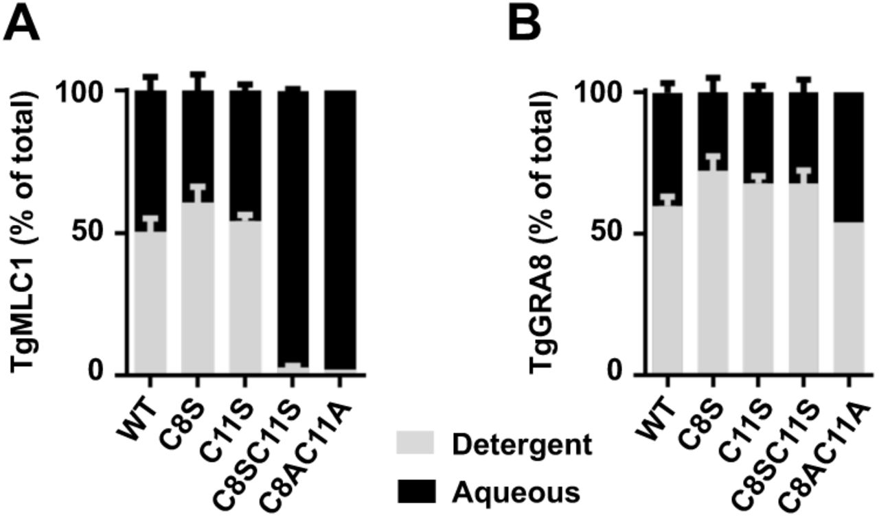 Blocking TgMLC1 palmitoylation causes the protein to shift into the aqueous phase in Triton X-114. WT, C8S, C11S, C(  8 ,  11 )S and C(  8 ,  11 )A parasites were extracted at 4°C in Triton X-114 and the extracted proteins phase partitioned by shifting the temperature to 20°C. The amounts of  (A)  TgMLC1and  (B)  TgGRA8 recovered in the detergent (grey) and aqueous (black) phases from each sample were determined by quantitative western blotting (see Fig. S2 for a representative western blot), and are displayed here as the percentage of the total TgMLC1 recovered in the two phases combined. The data shown are the means and standard error of the mean (SEM) from 2 (C8S, C11S) or 4 (WT, C[8,11]S) independent replicates; C(  8 ,  11 )A parasites were analyzed once.