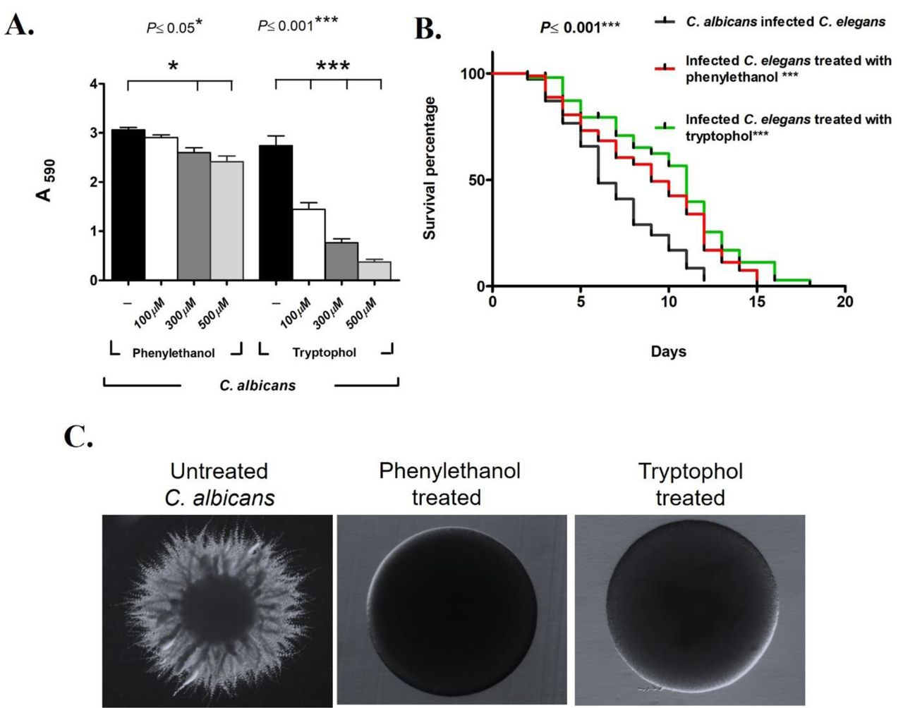 Phenylethanol and tryptophol are sufficient for beneficial activity in vitro and in vivo. (A) Varying concentration (100, 300 and 500 μM) of commercially procured aromatic alcohols, phenylethanol and tryptophol were exposed to C. albicans and biomass was measured with crystal violet (n = 5 experimental replicates). (B) Life span of C. elegans infected with C. albicans treated tryptophol (100 μM) (green curve) and phenylethanol (100 μM) (red curve) (n =3 experimental replicates, 82 ± 28 nematodes). (C) Representative images showing filamentation of C. albicans , upon phenylethanol and tryptophol treatment. Error bars represents means± standard deviations (SD). Kaplan-Meier statistical analysis tools by Log-rank (Mantel-Cox) tests were used for the C. elegans survival assay.