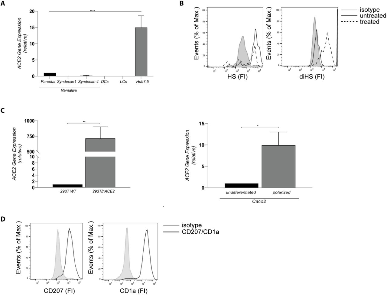 ( A ) ACE2 cell surface expression on Namatwa cell line, DCs, LCs and Huh 7.5. Representative data for an experiment repeated more than three times with similar results. ( B ) Huh7.5 were left untreated or treated with heparinase for 1 hand heparan sulfate or digested heparan sulfate expression was determined by flow cytometry. One representative donor out of 3 is depicted. ( C ) Cell surface expression of ACE2 on 293T and Caco2 cell lines was determined by real-time PCR. ( D ) LC were stained with antibodies against CD207 and CD1 a and analysed by flow cytometry. The histogram shows the cell surface expression of the receptor. Representative data for an experiment repeated more than three times with similar results. Data show the mean values and error bars are the SEM. Statistical analysis was performed using ( A ) ordinary one-way ANOVA with Tukey's multiple-comparison test. ****p