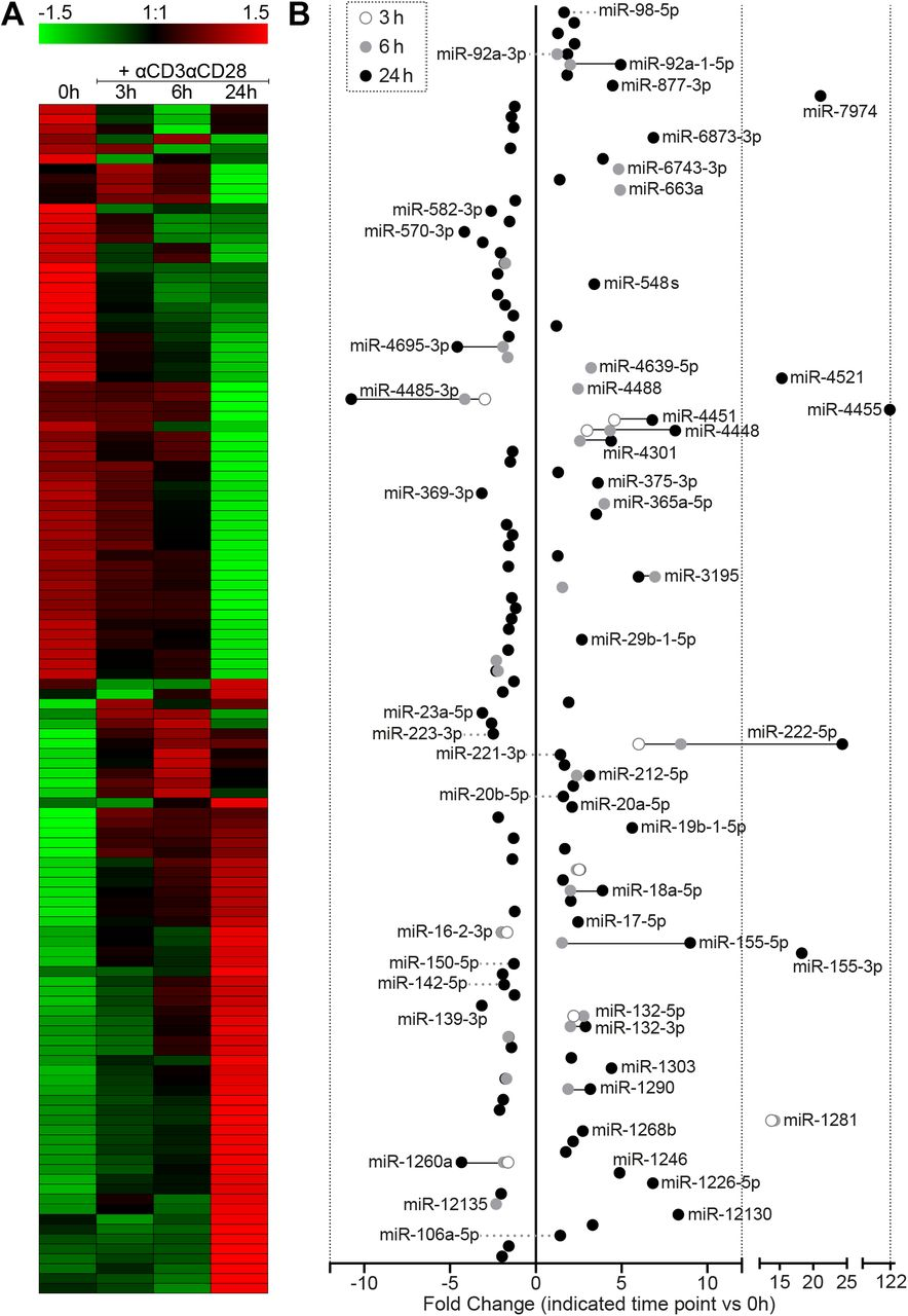 Differential miRNA expression 3h, 6h and 24h after αCD3αCD28 stimulation of human primary CD4+ T cells. A) Heat map for differentially expressed miRNAs. The heatmap represents relative expression values for a non-redundant collection of differentially expressed miRNAs (adjusted p-value